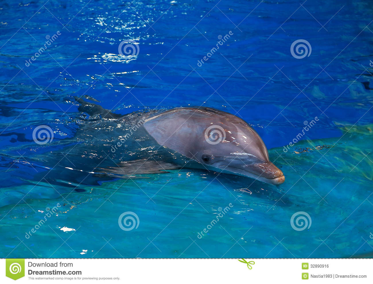 Resting Dolphin In Bright Blue Stock Photo Image Of