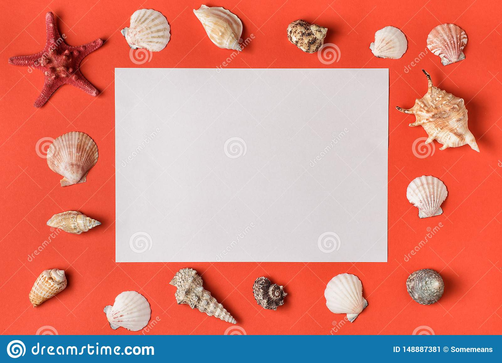 Retângulo branco com quadro das conchas do mar Coral vivo na configuração lisa do fundo Copie o espa?o para o texto