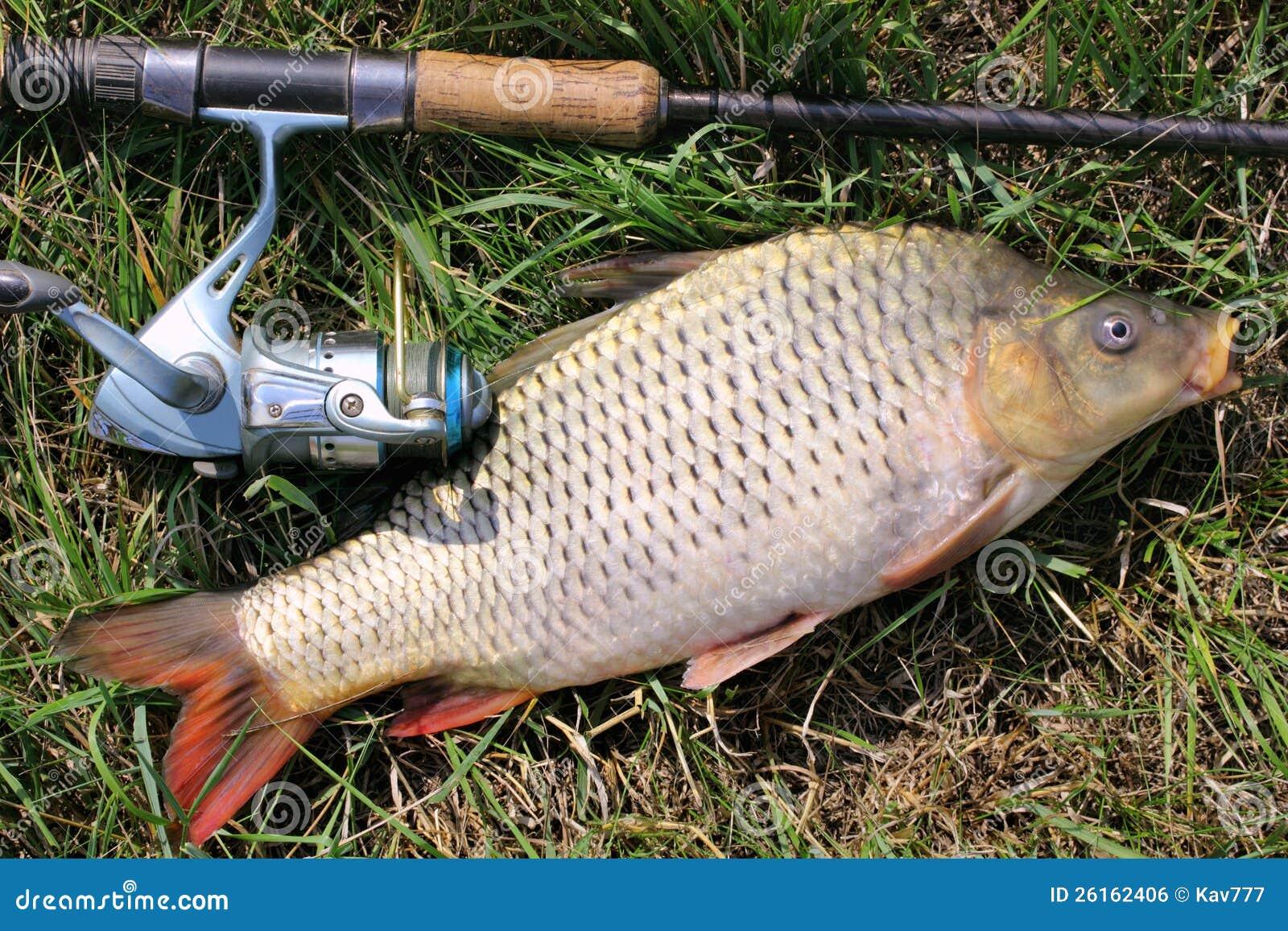 Retén de pesca - carpa