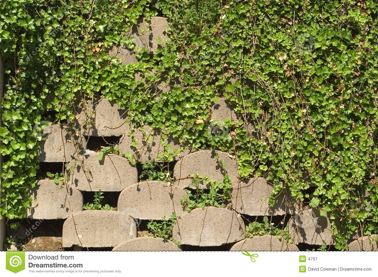 Retaining Wall With Ivy Royalty Free Stock Photography