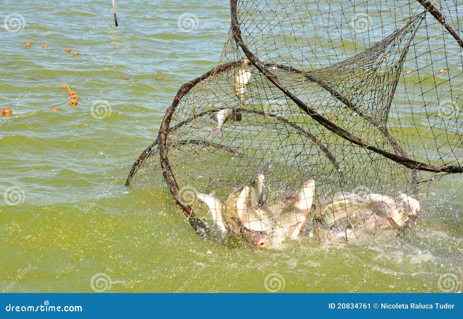 Rete da pesca con i pesci immagine stock immagine di for Rete da pesca arredamento