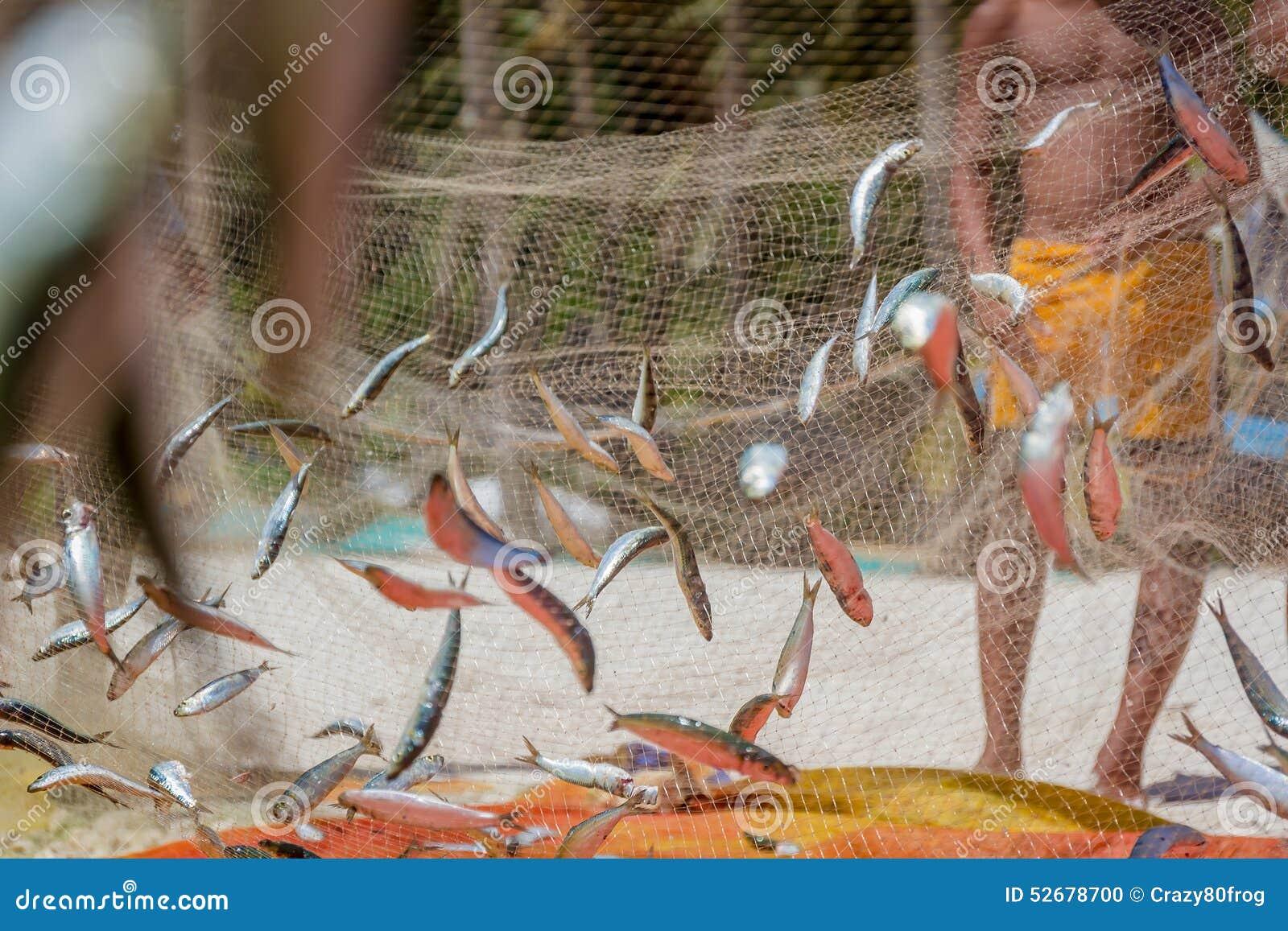 Rete da pesca con il pesce fotografia stock immagine di - Rete da pesca per decorazioni ...