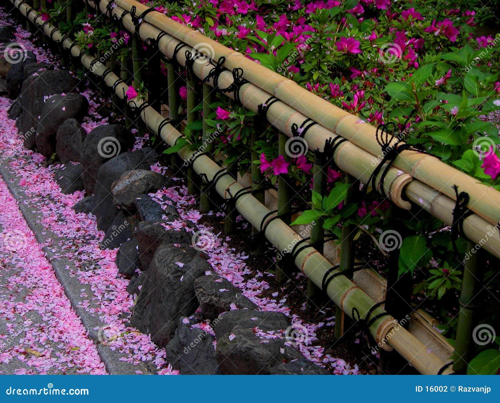 Rete fissa del bambù della sorgente