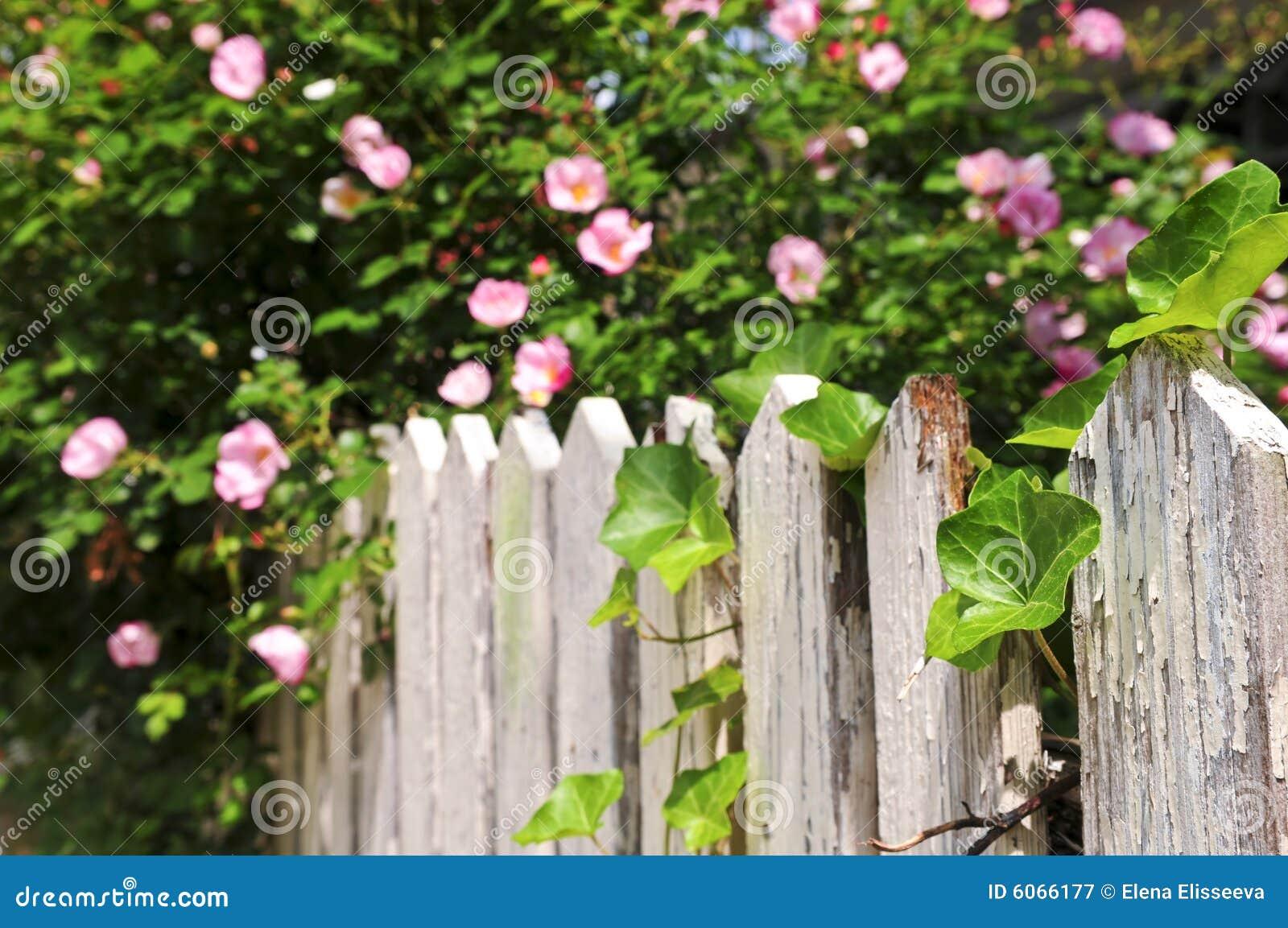 Rete fissa del giardino con le rose immagine stock - Giardino con rose ...