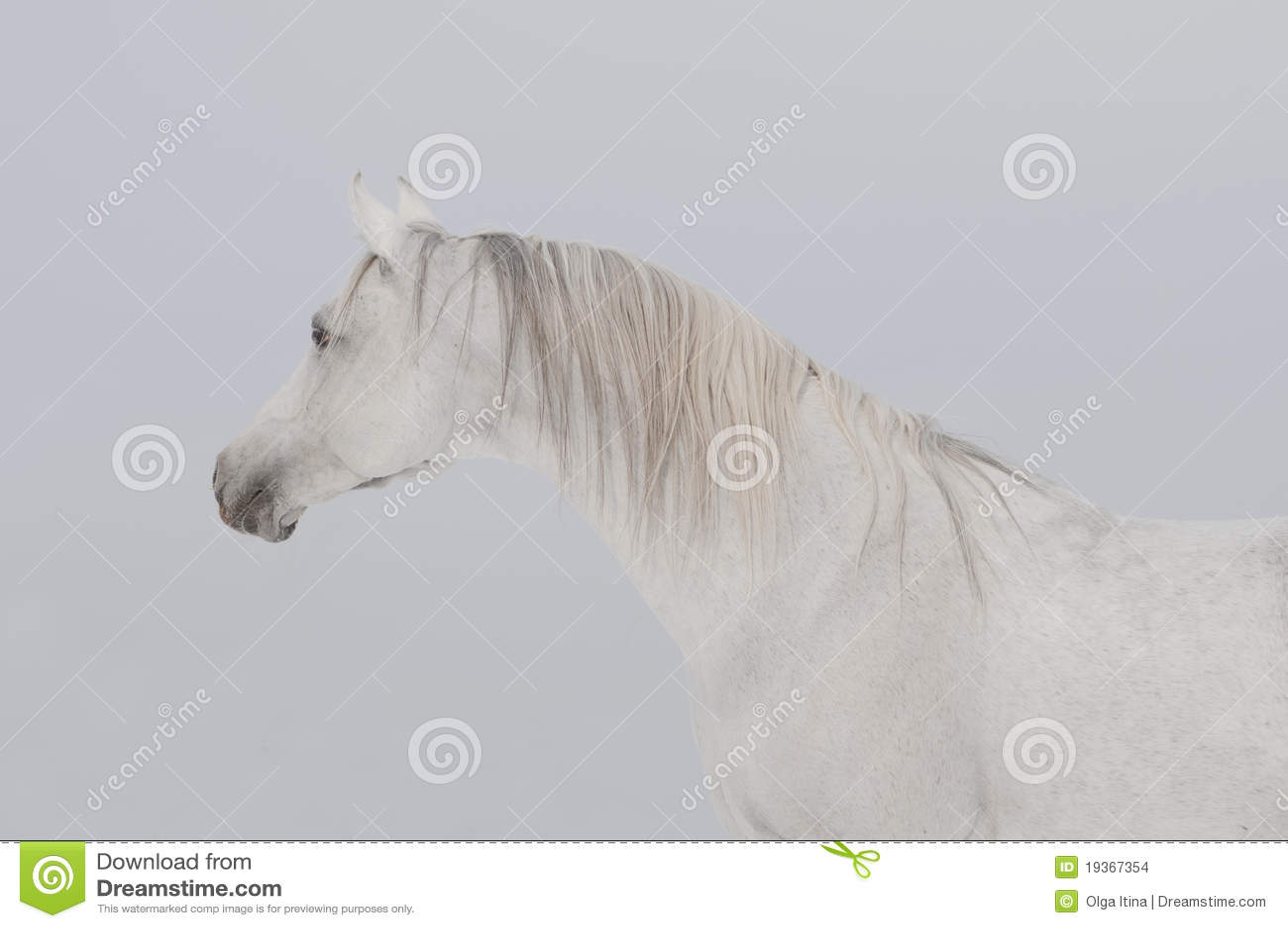 Retrato árabe do cavalo