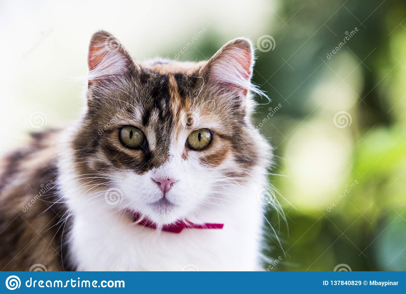 Retrato adorável de um gato fêmea tricolor curioso com efeito verde forte do bokeh