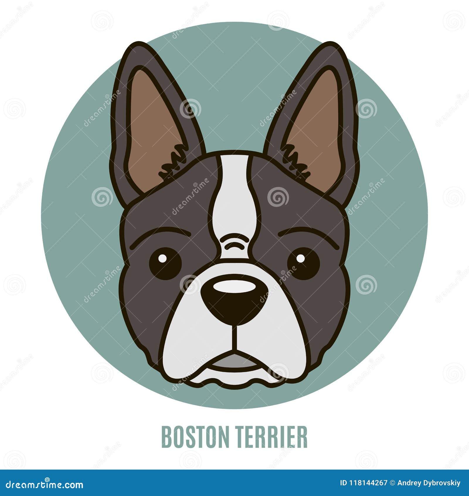 Retrato De Boston Terrier Ilustración Del Vector Ilustración del ...