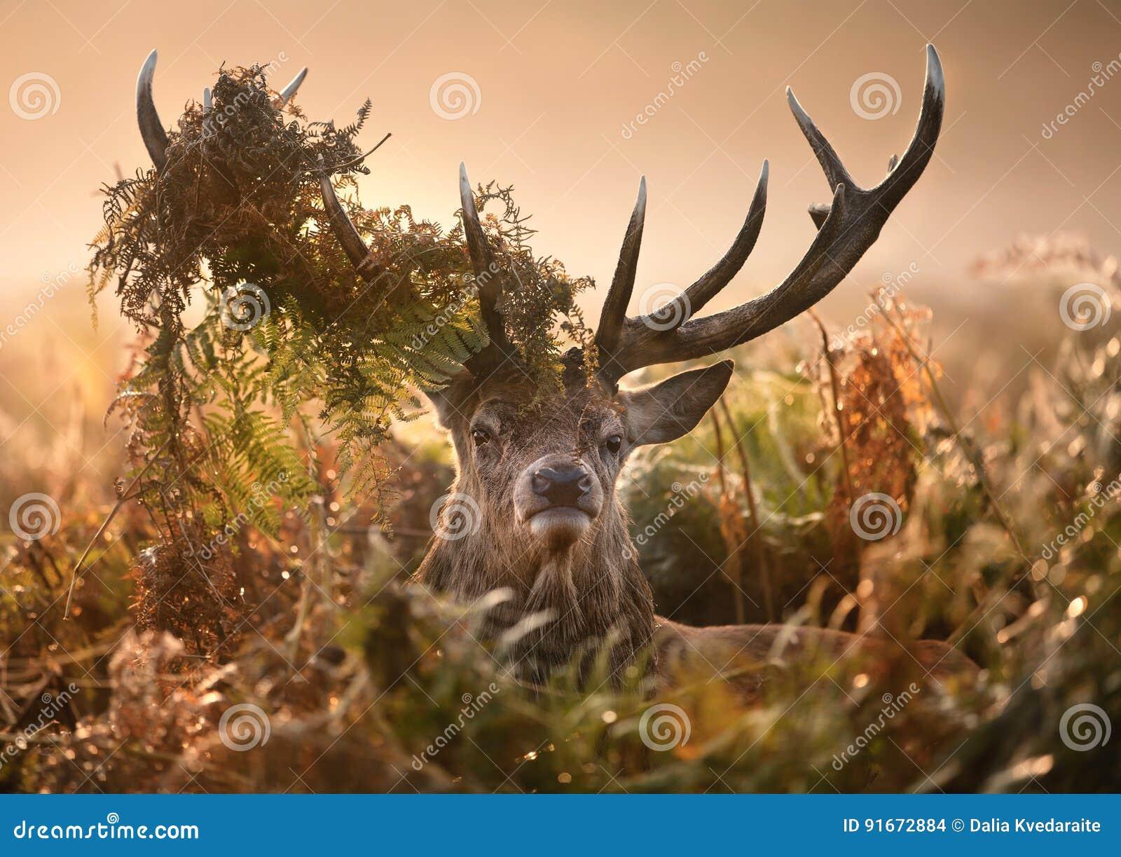 Retrato de ciervos comunes con una corona de helechos