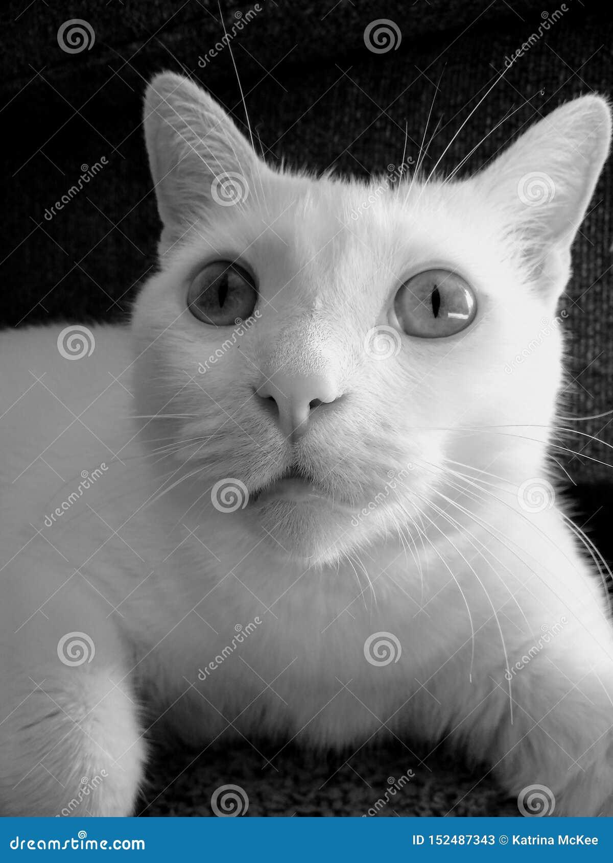 Retrato de Jack o gato