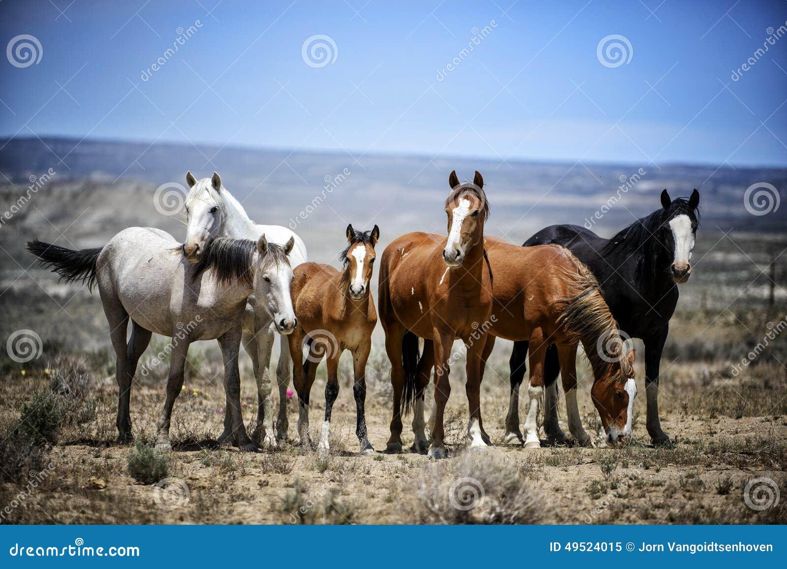 Retrato de la banda del caballo salvaje del lavabo de la arena