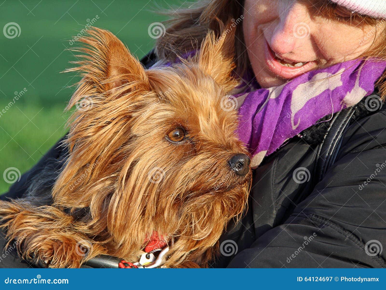 Retrato de la cara del terrier de Yorshire