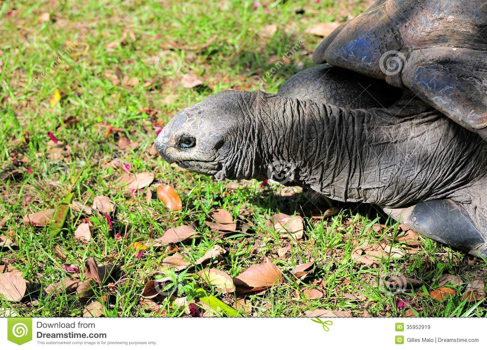 Retrato de la tortuga de las Islas Galápagos