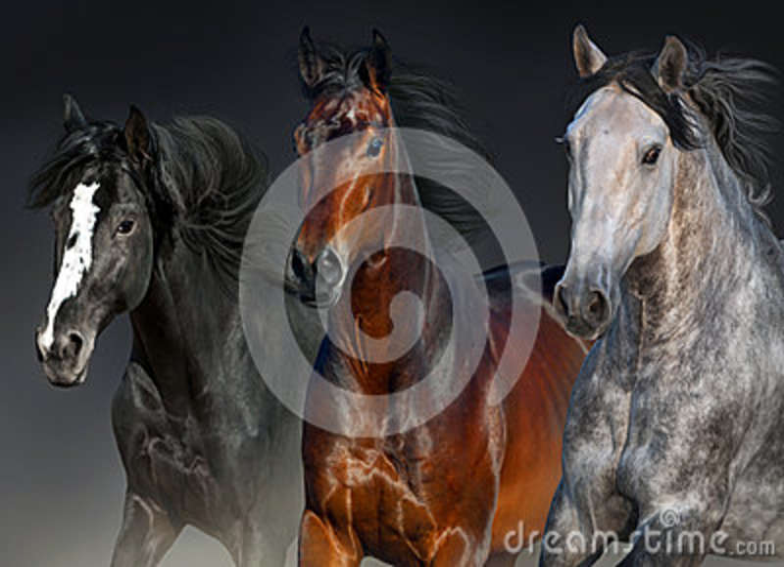 Retrato de los caballos en el movimiento