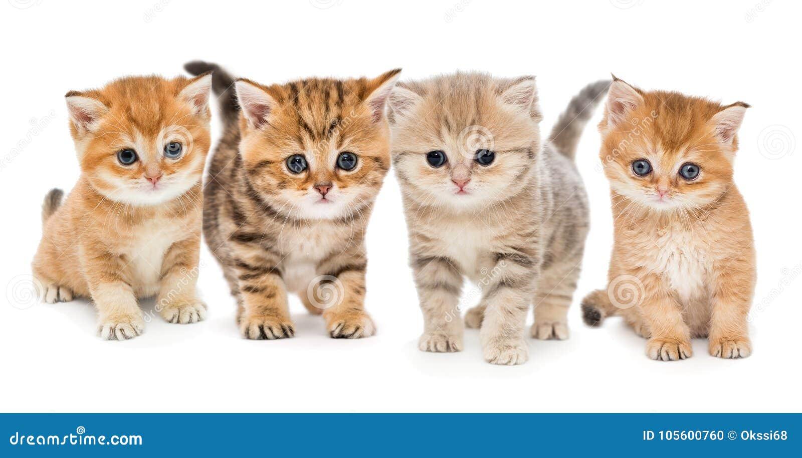 Retrato de quatro gatinhos