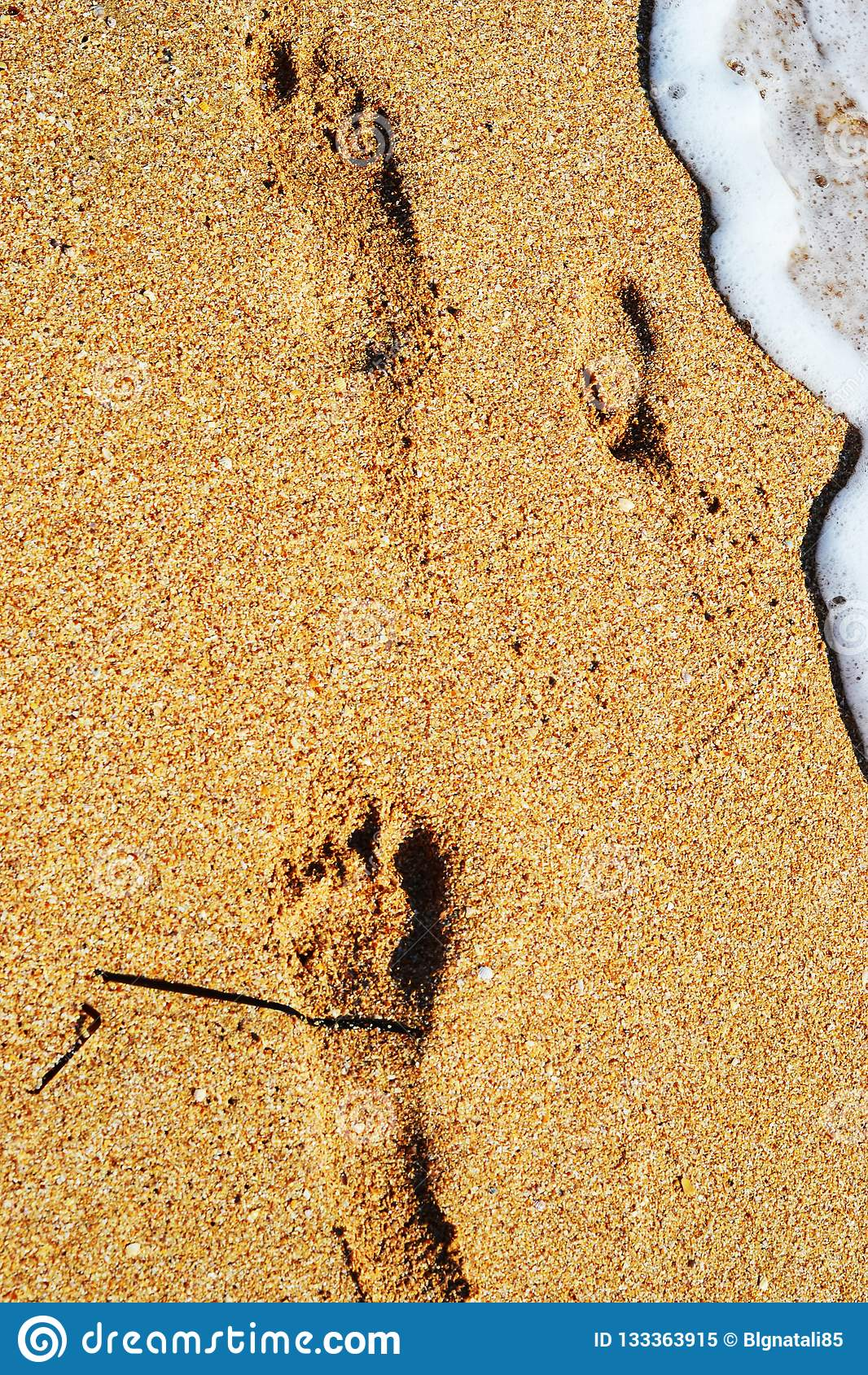 Retrato de um ‹do †do ‹do †do cão disperso no crescimento completo na estação do outono