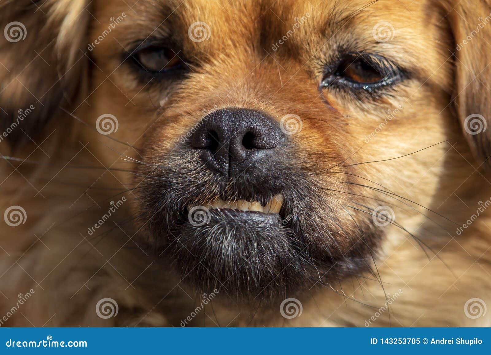 Retrato de um cão na tarde