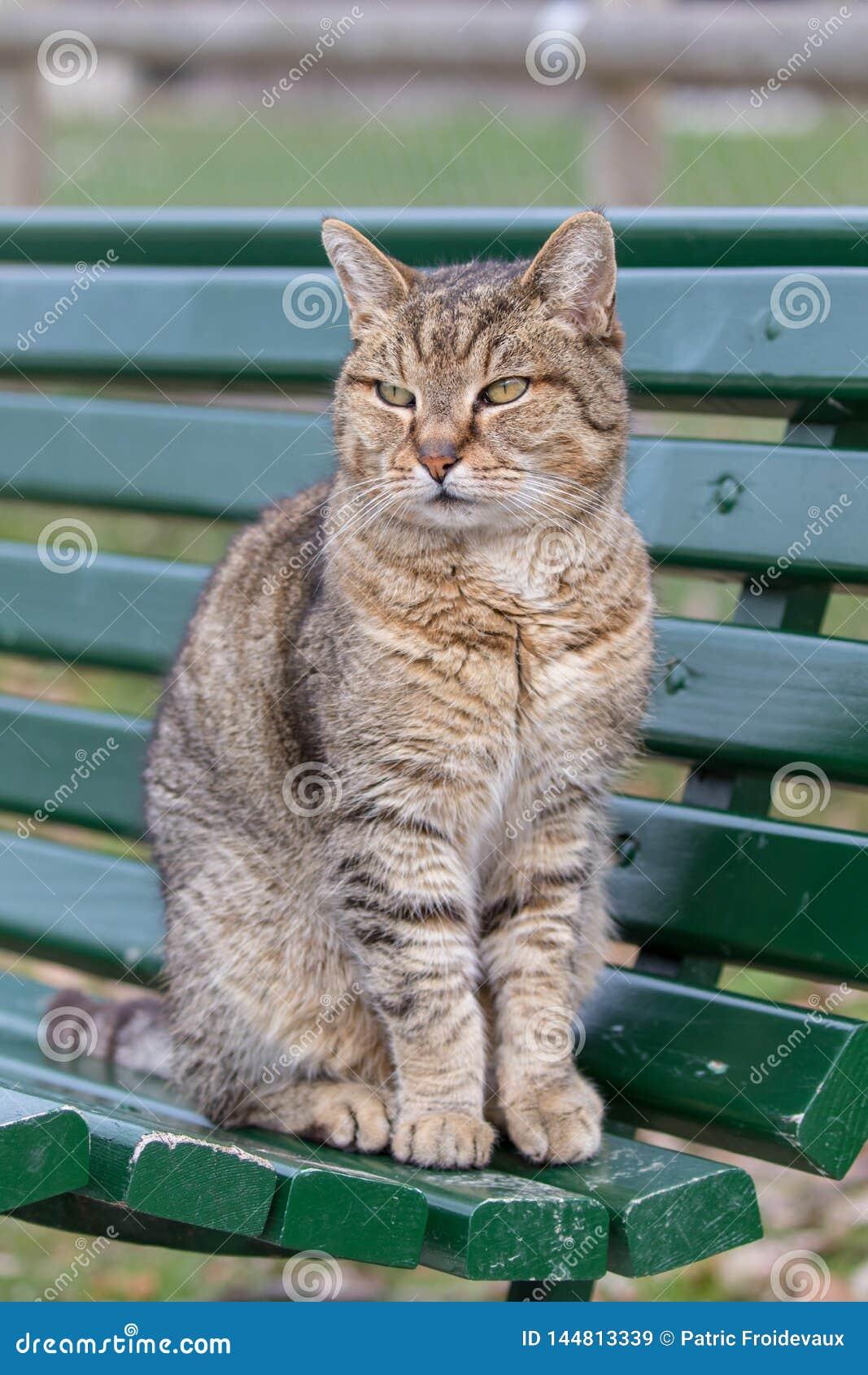 Retrato de um gato bonito que senta-se em um banco
