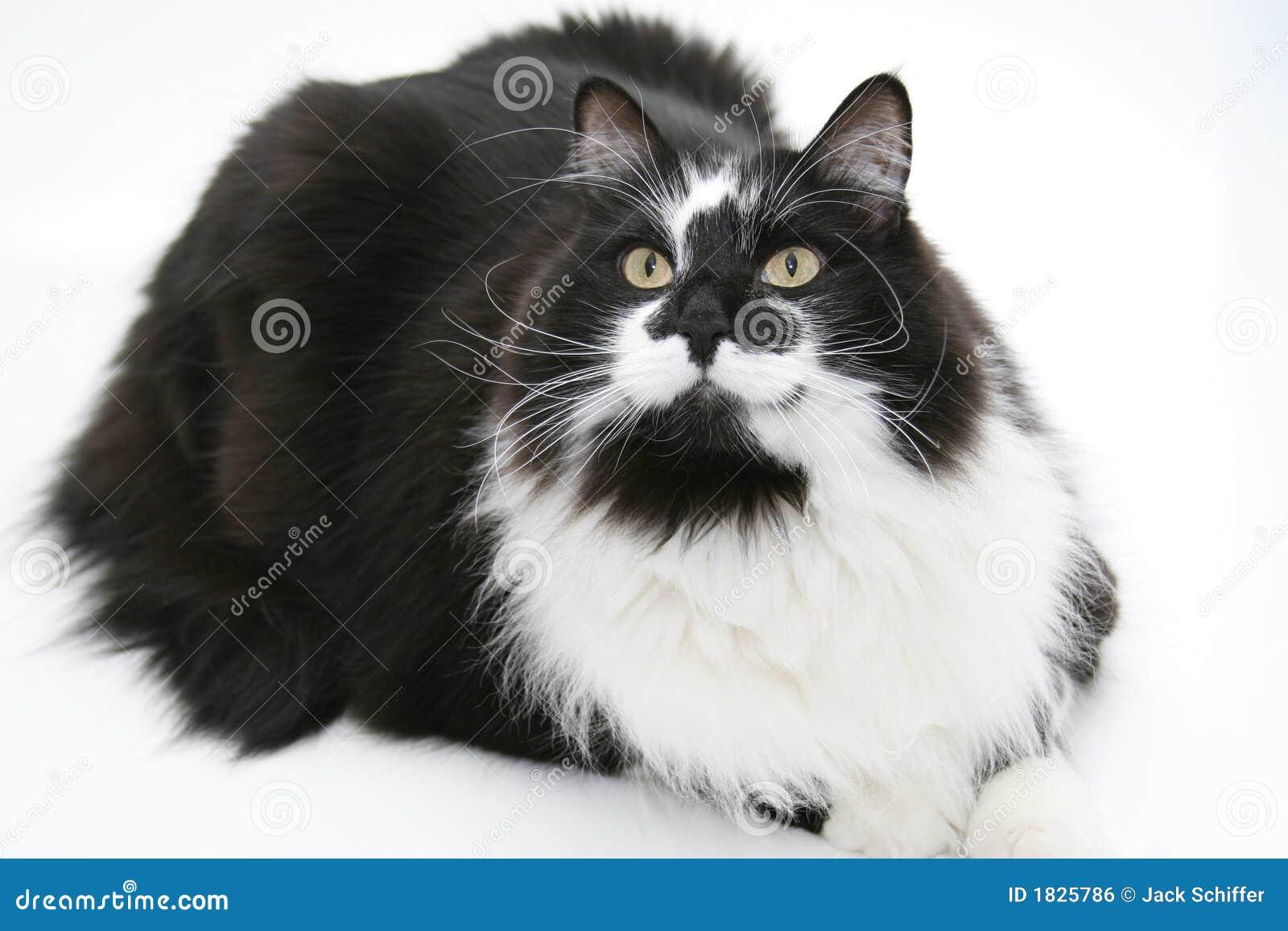 retrato de um gato preto e branco imagem de stock royalty free imagem 1825786. Black Bedroom Furniture Sets. Home Design Ideas