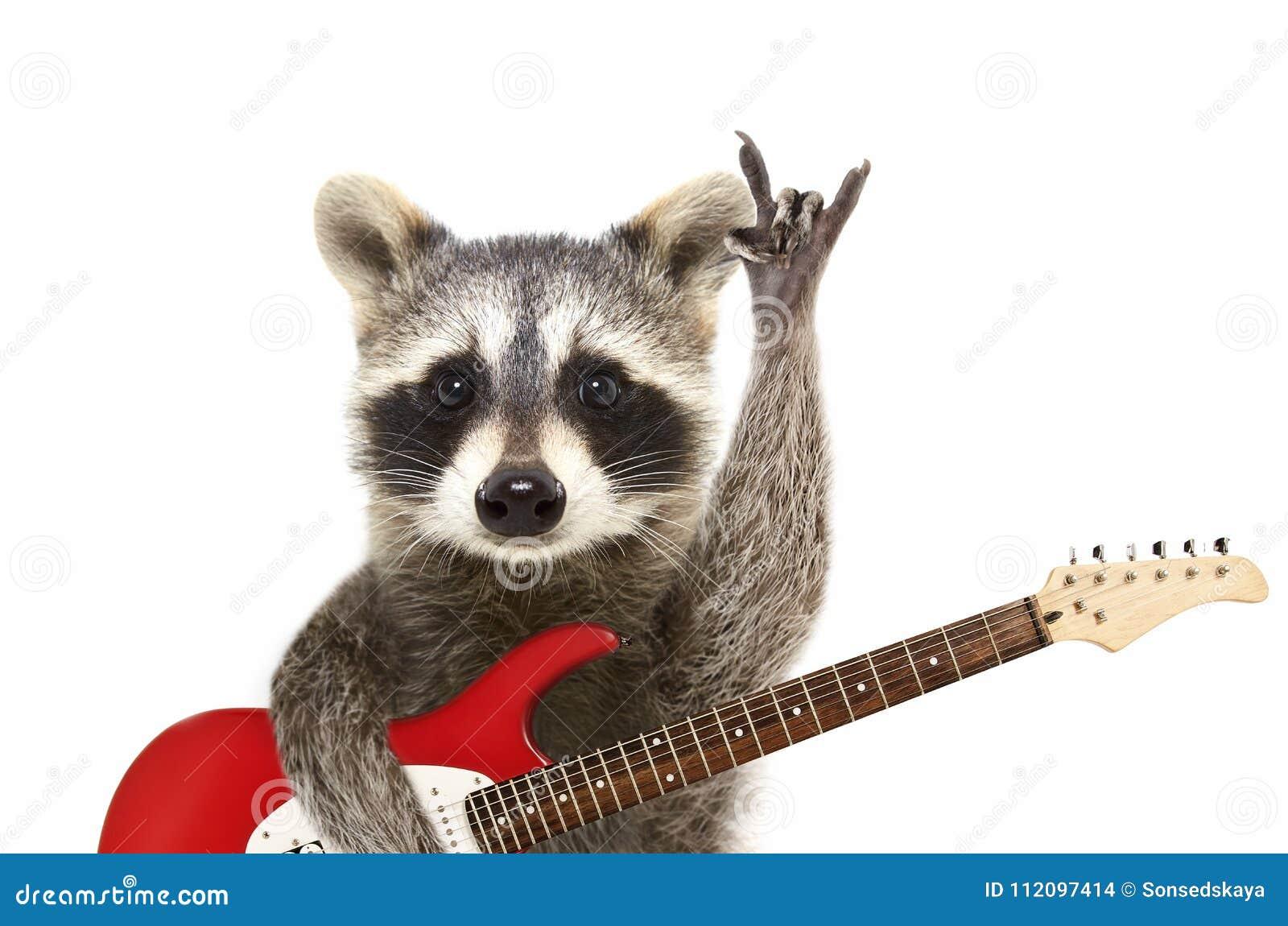 Retrato de um guaxinim engraçado com guitarra elétrica, mostrando um gesto da rocha