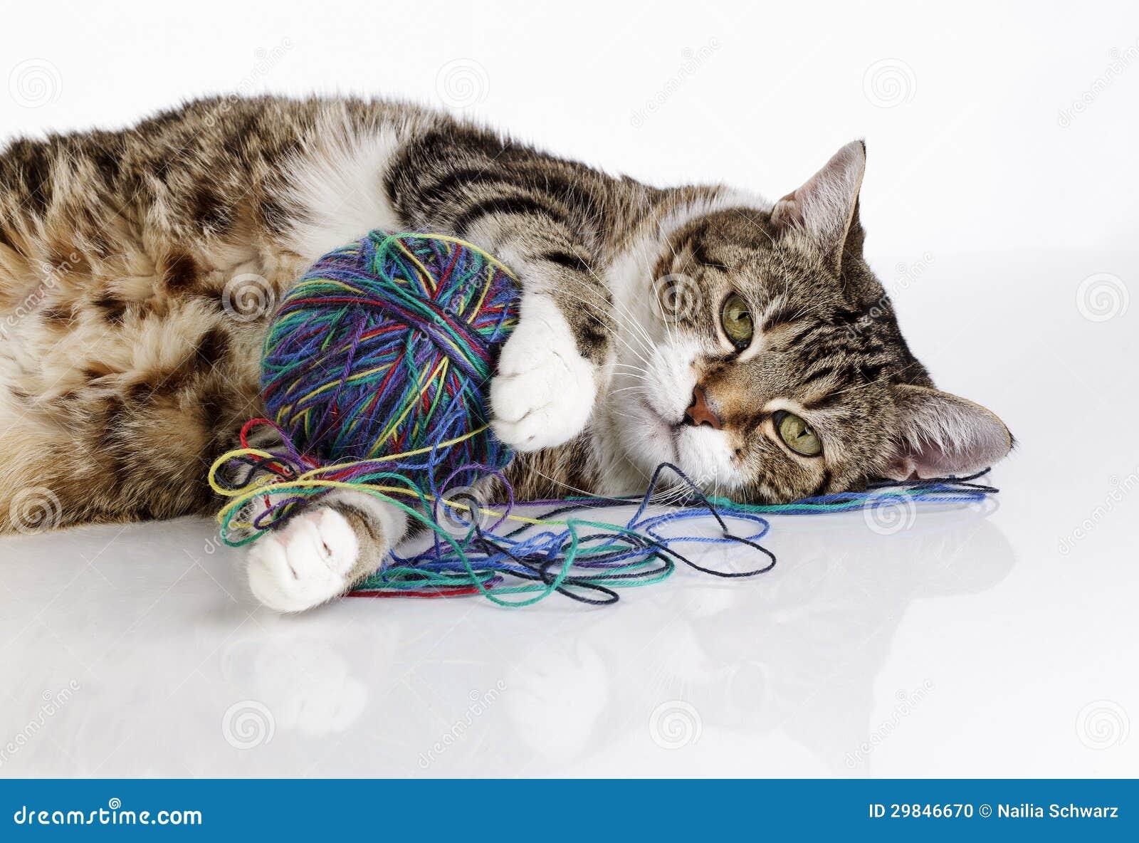 Gato brincalhão