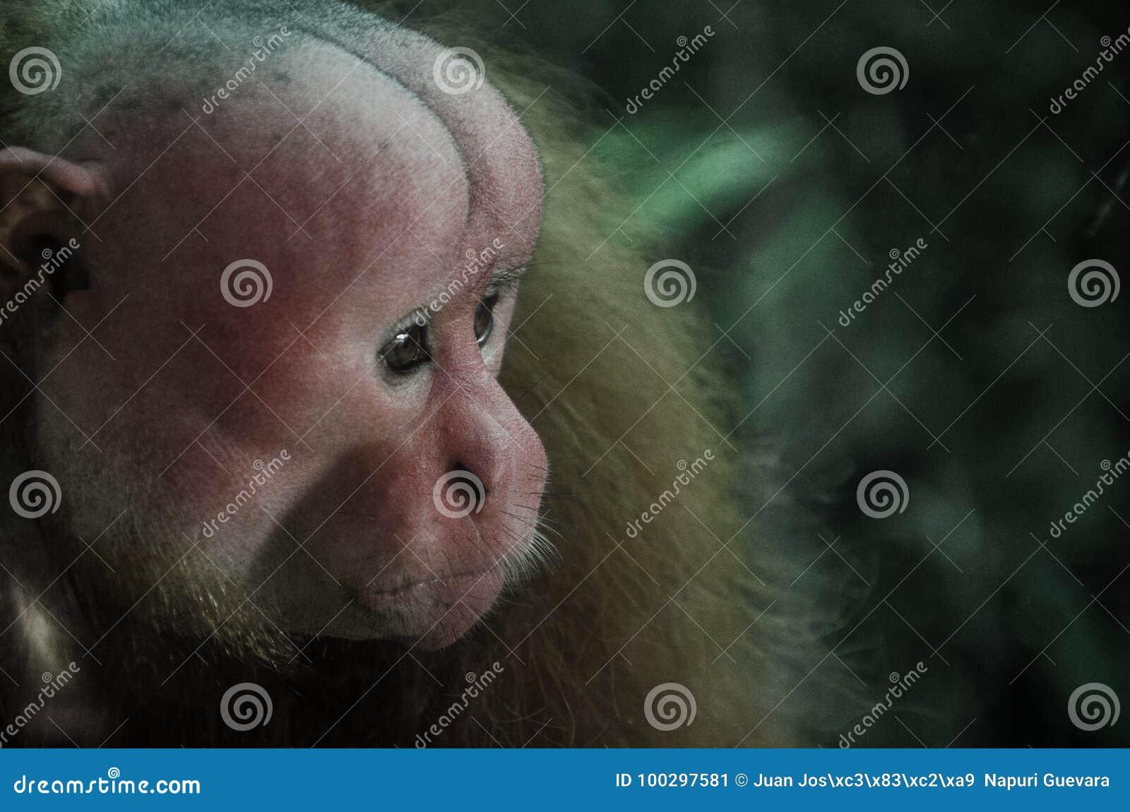 Retrato de um macaco