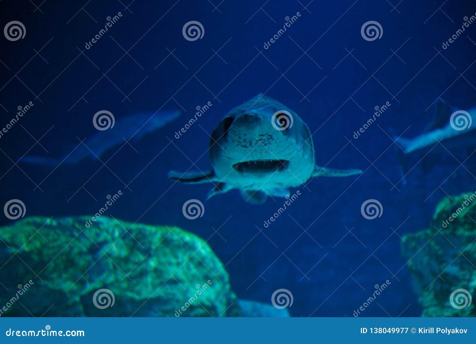 Retrato de um tubarão no aquário