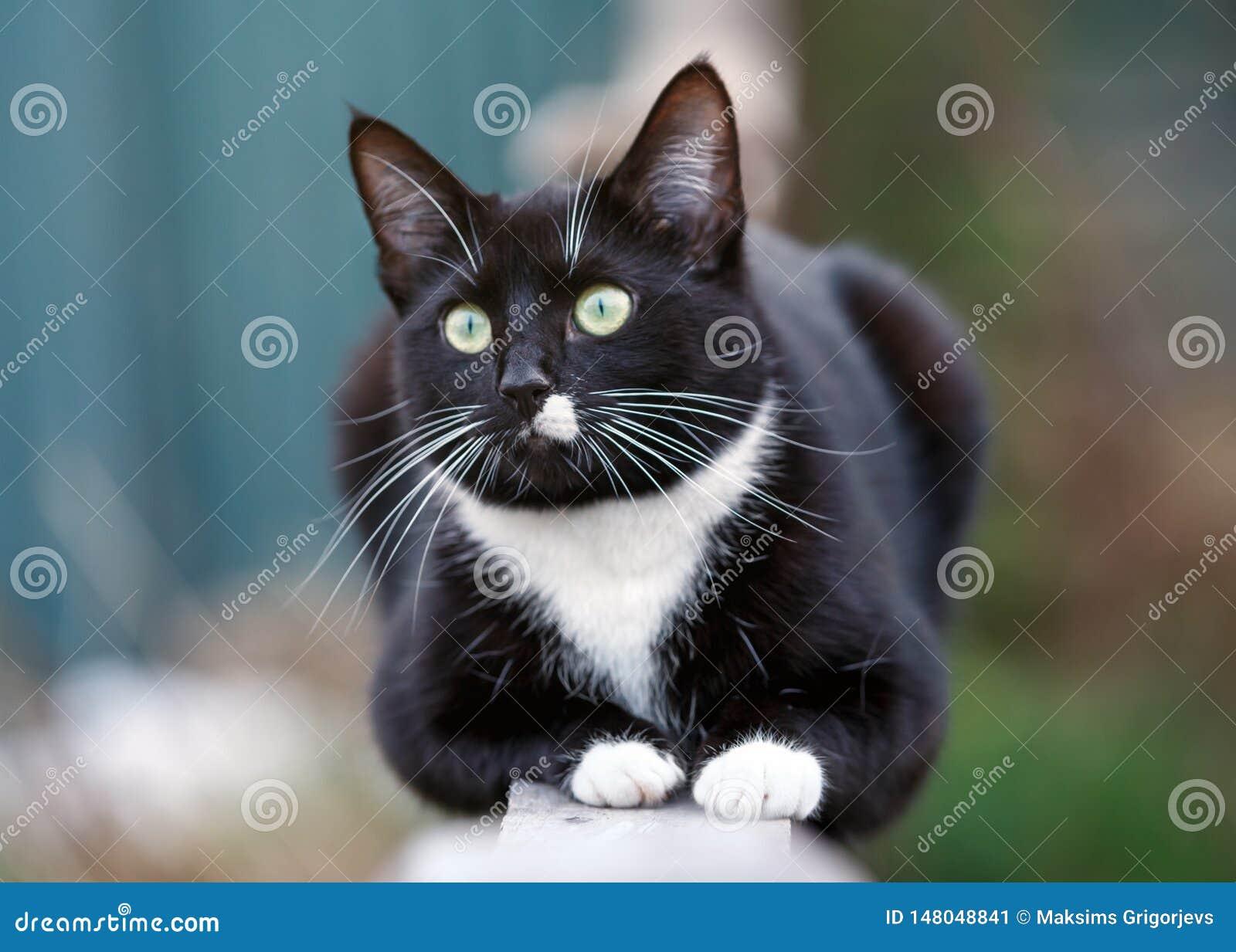 Retrato de un gato blanco y negro que se sienta en la cerca