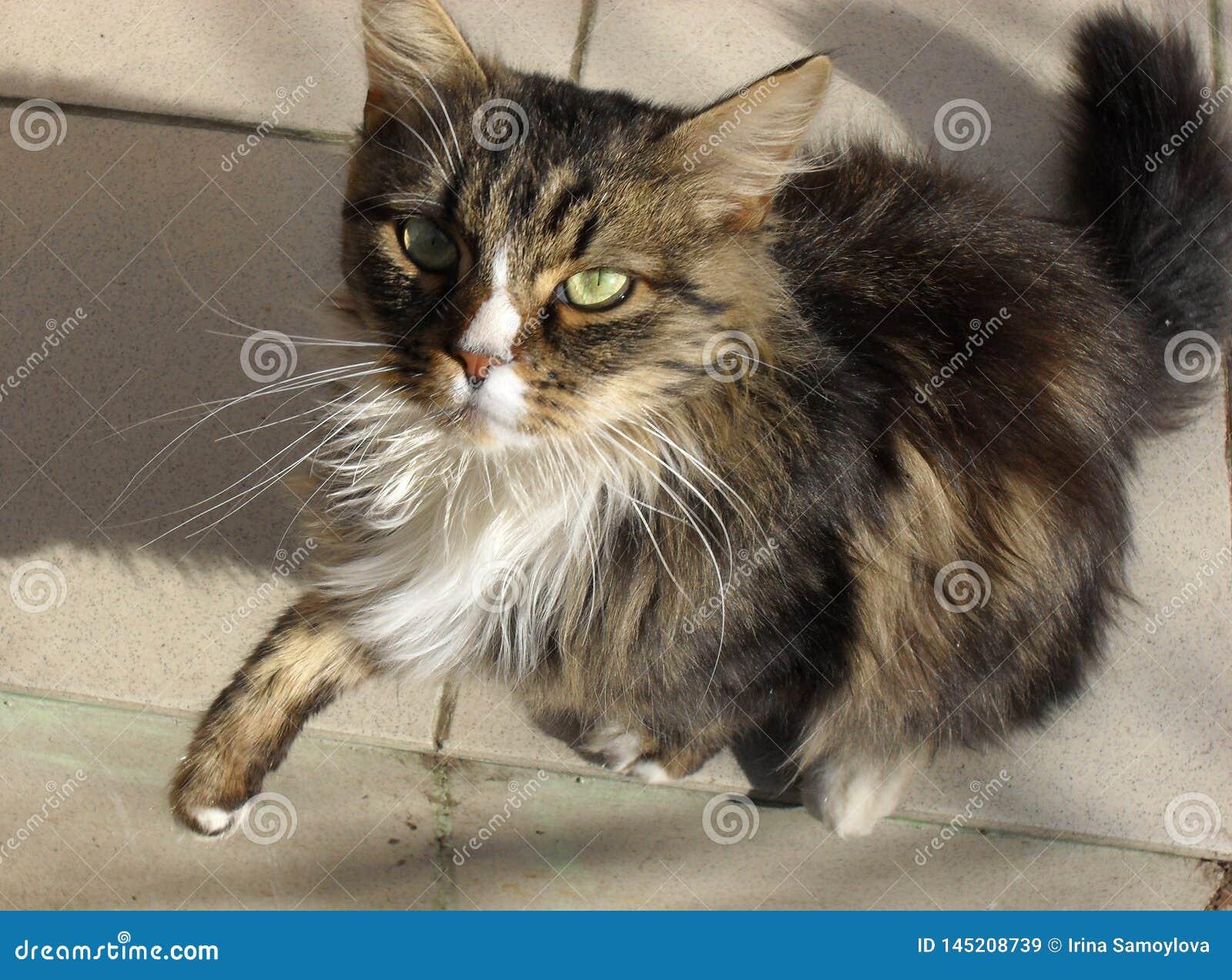 Retrato de un gato mullido lindo adorable