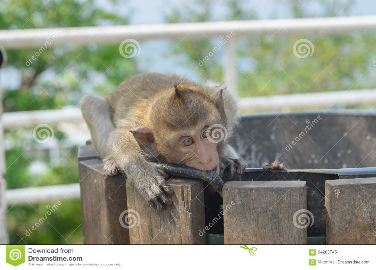 Retrato de un mono en fauna
