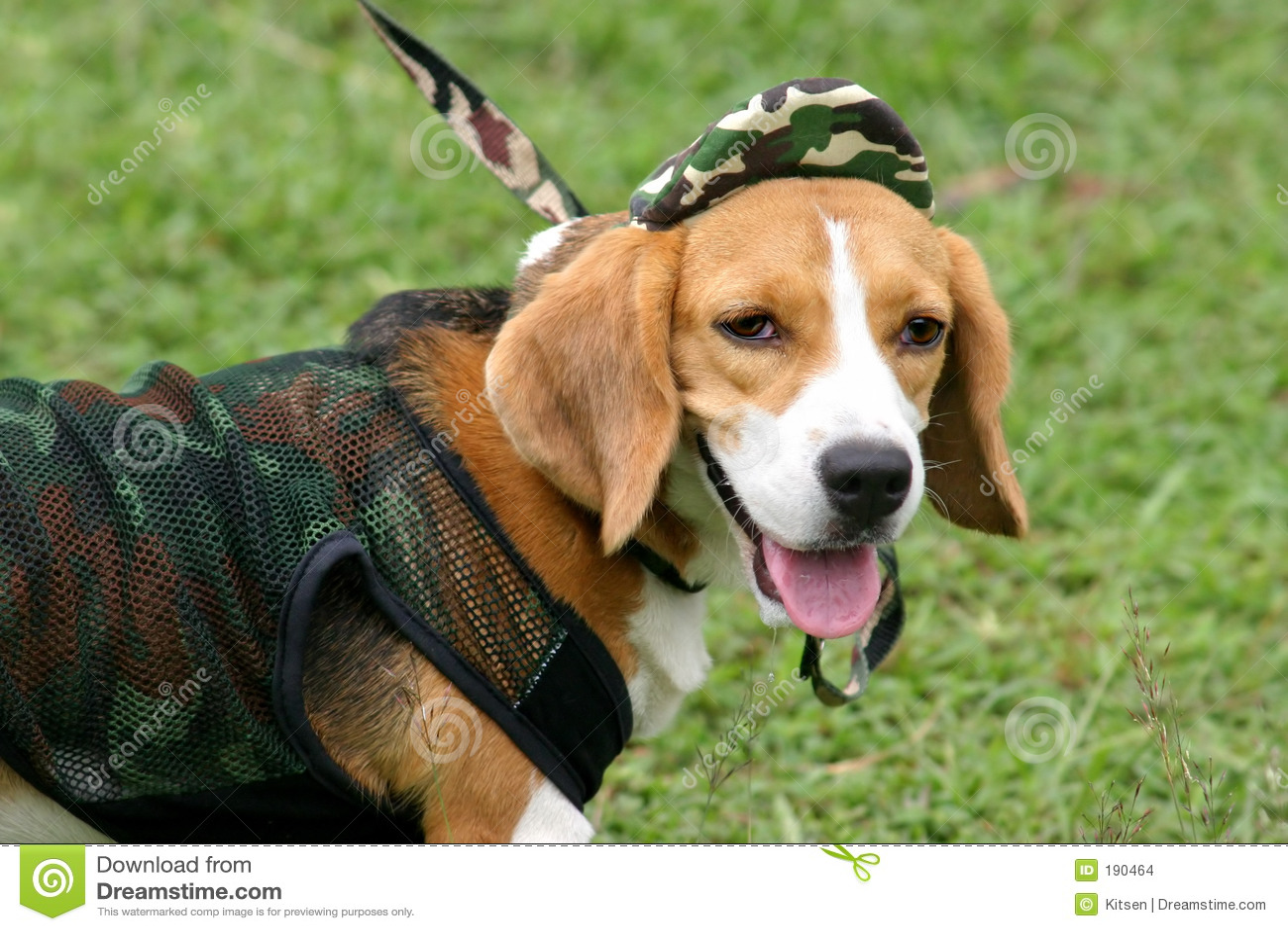Retrato del beagle