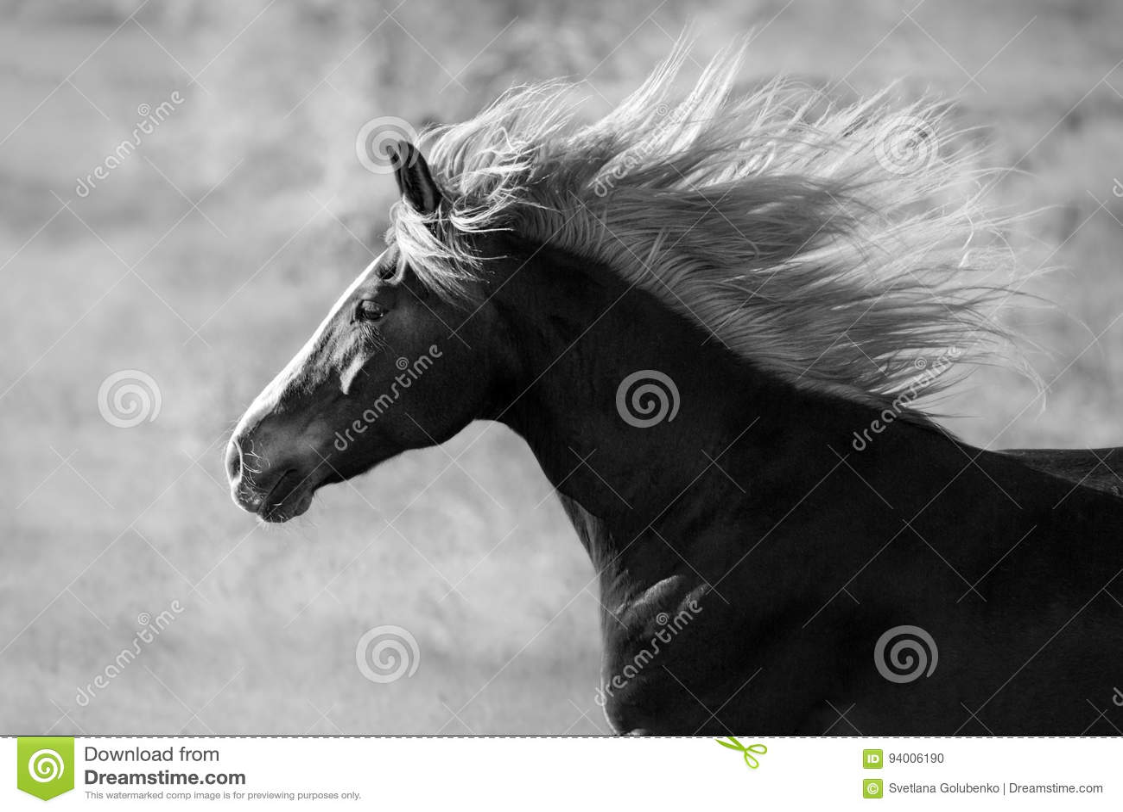 Retrato del caballo con la melena larga