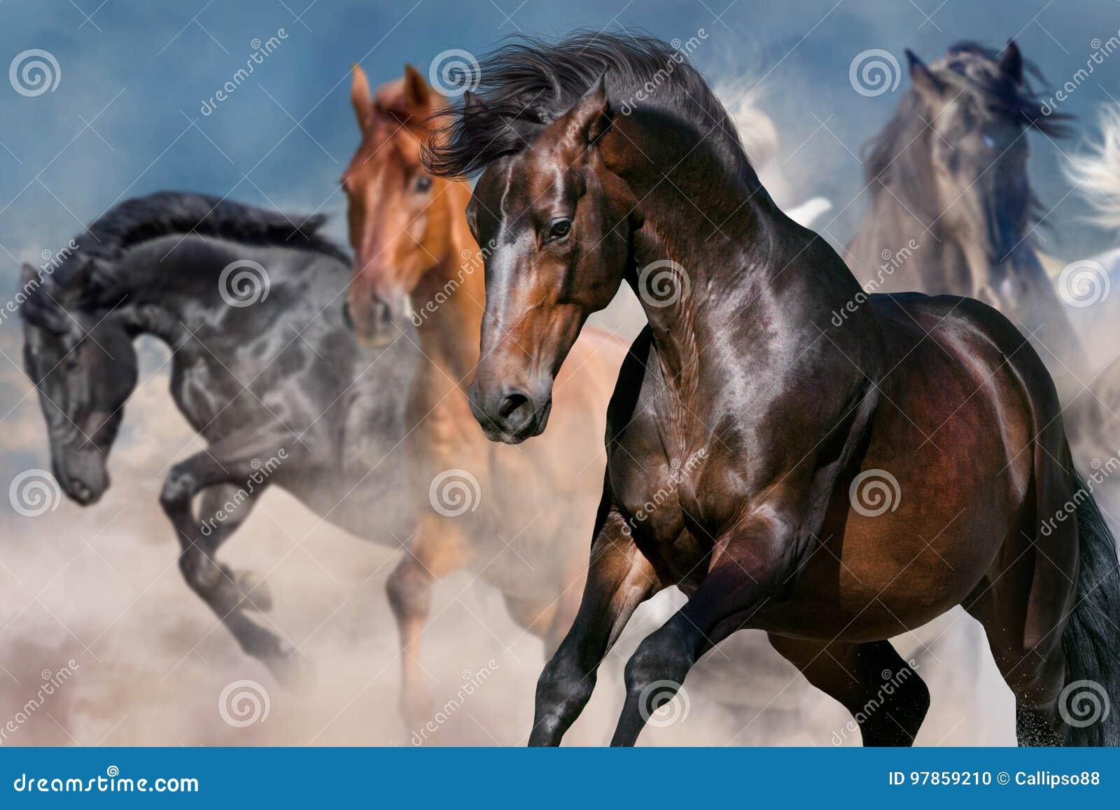Retrato del caballo en el movimiento