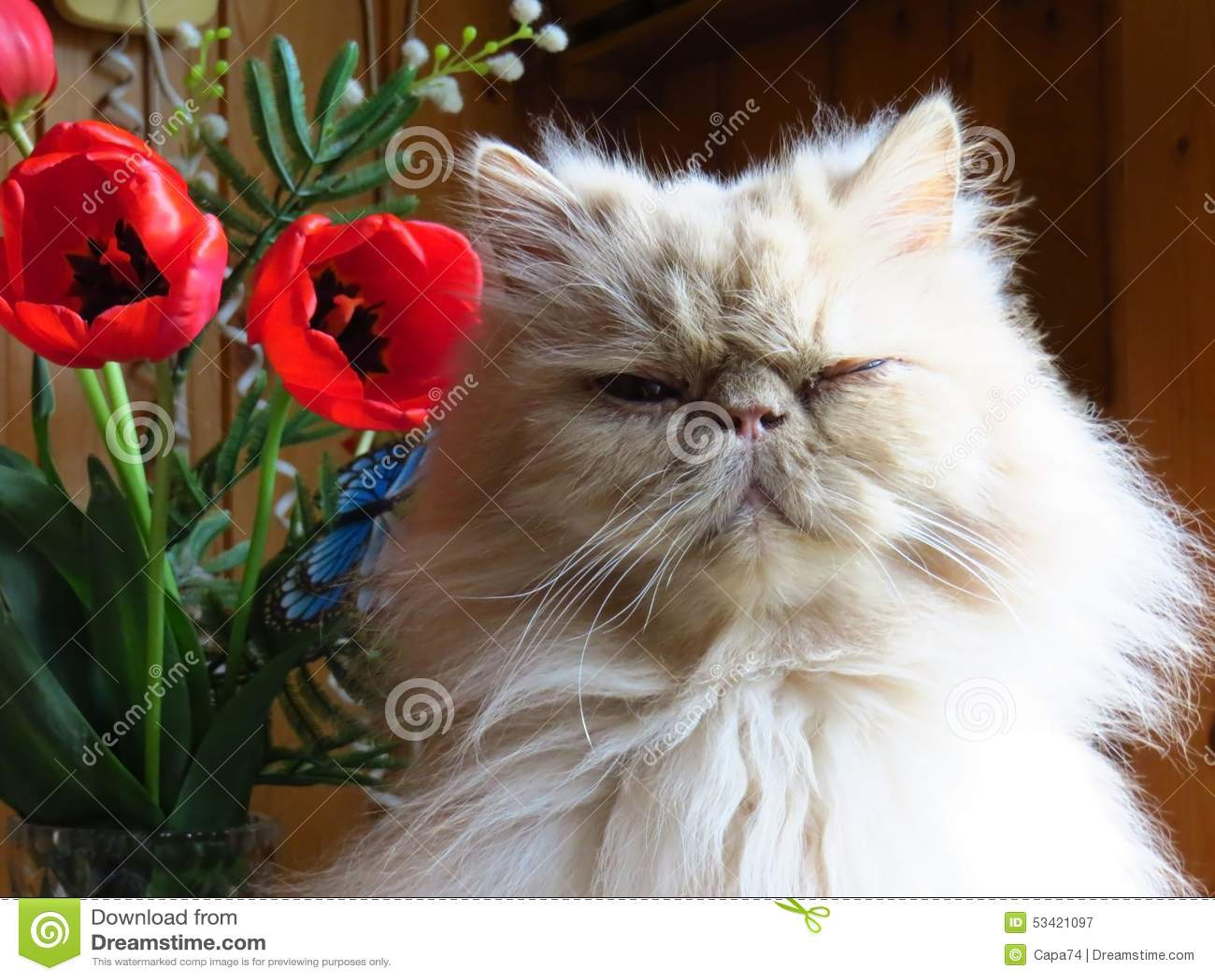 Retrato del cervatillo adulto del gato persa con las flores