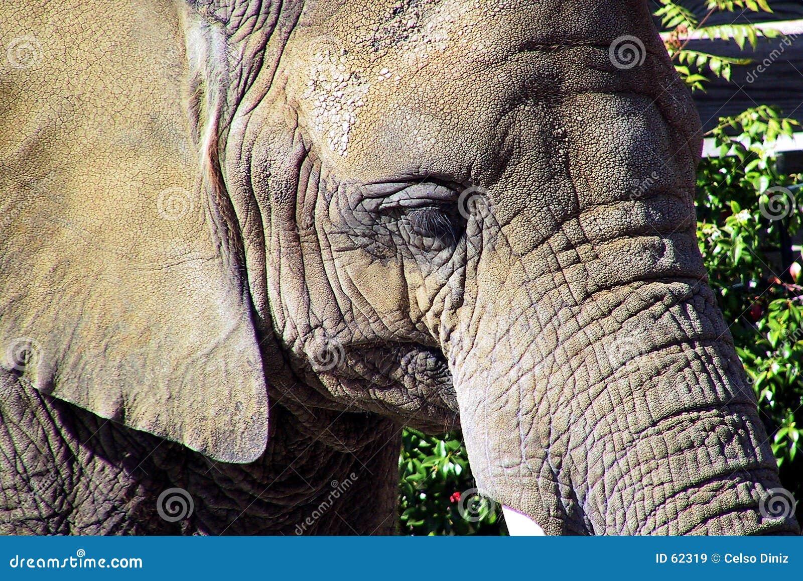 Retrato del elefante