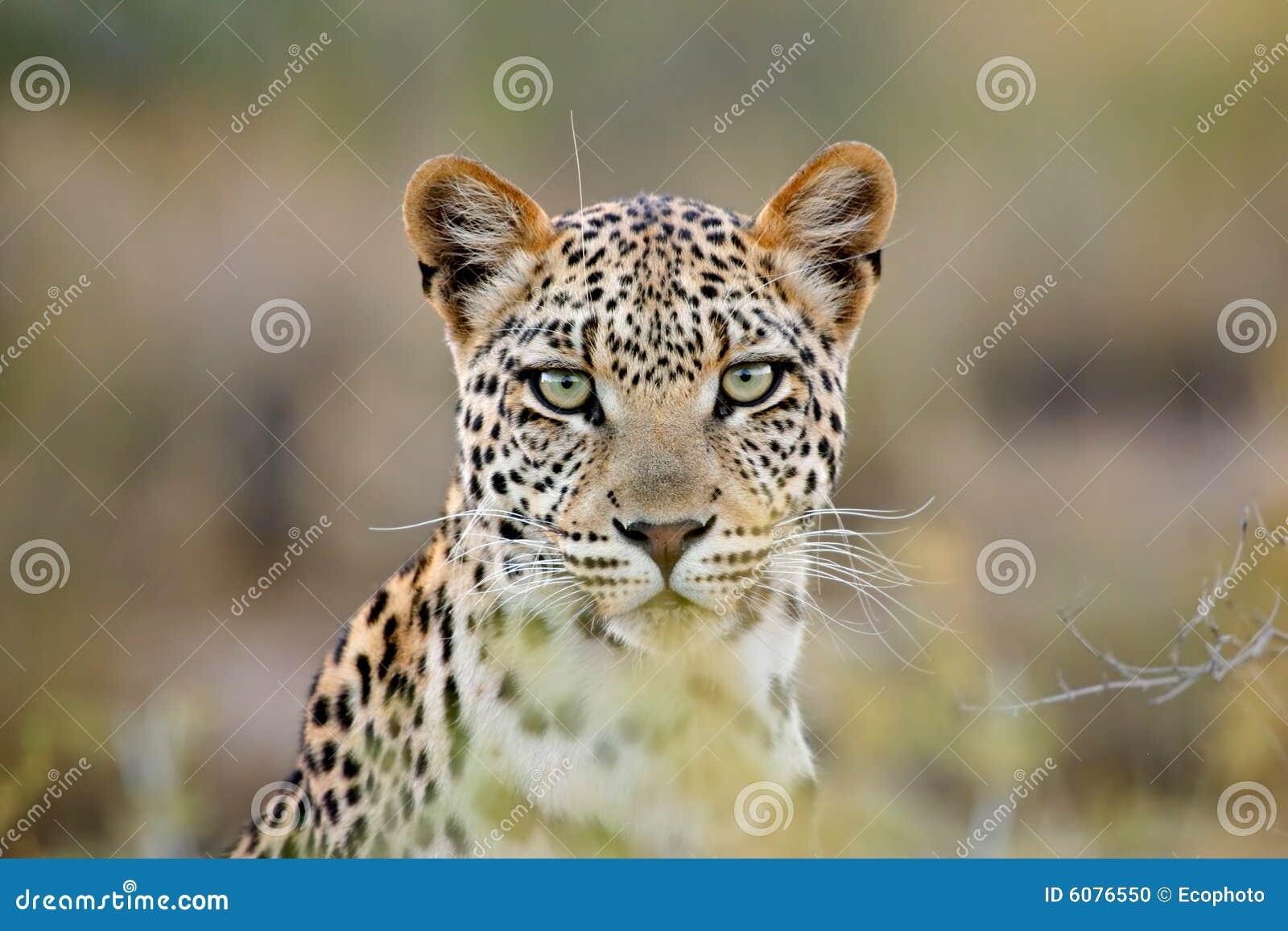 Retrato del leopardo