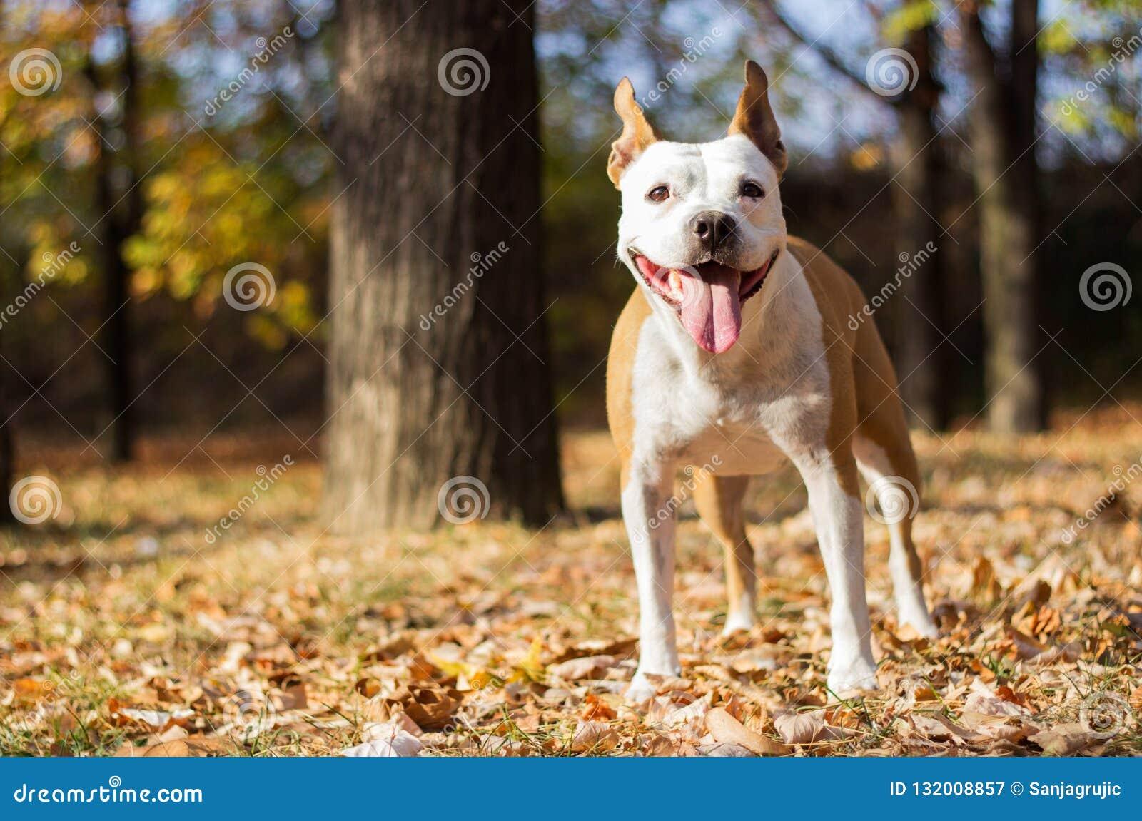 Retrato del perro de la felicidad, fondo de la falta de definición