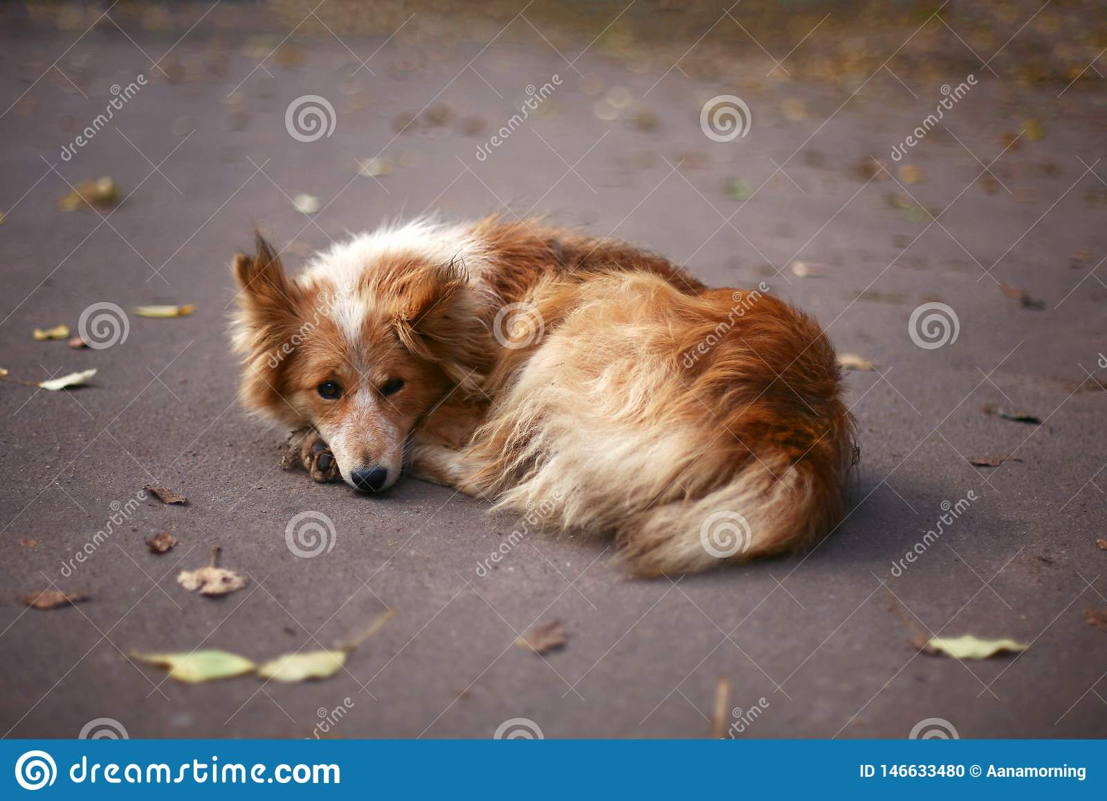 Retrato del perro mullido en el parque en otoño