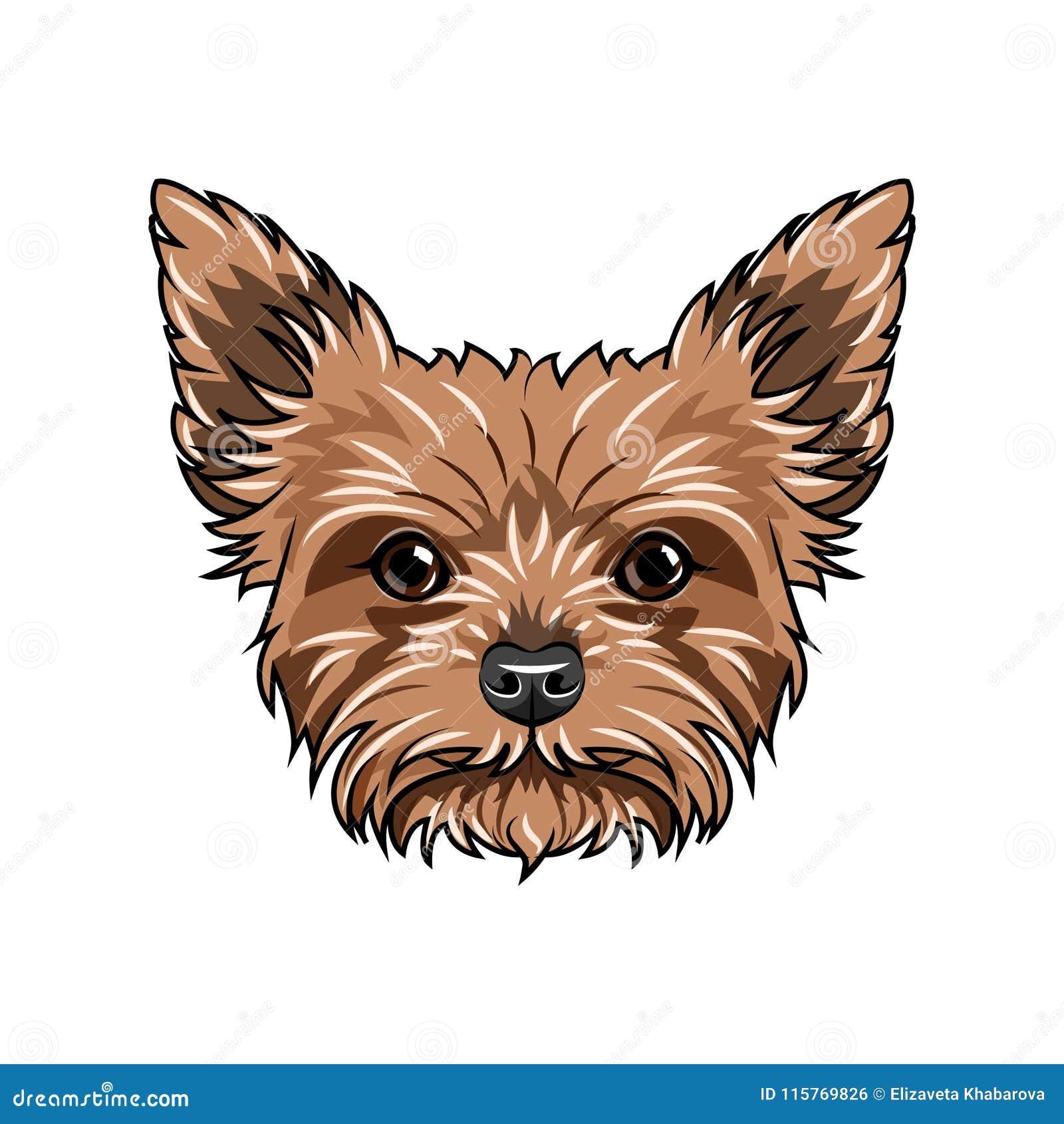 Retrato Del Perro Del Terrier De Yorkshire Cara Del Perro Cabeza