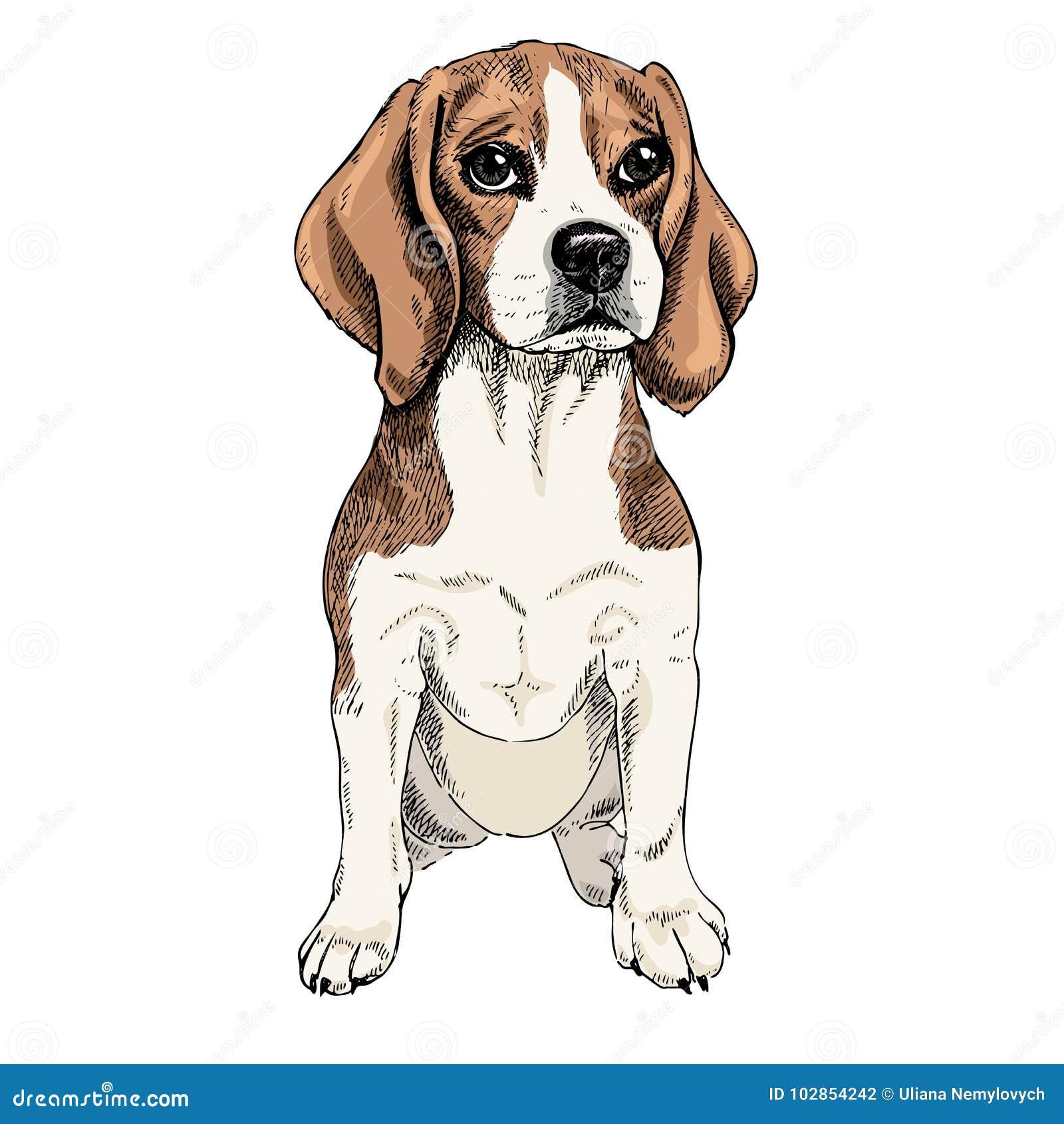 Lujo Beagle Para Colorear Imagen - Ideas Para Colorear - verbamanent ...