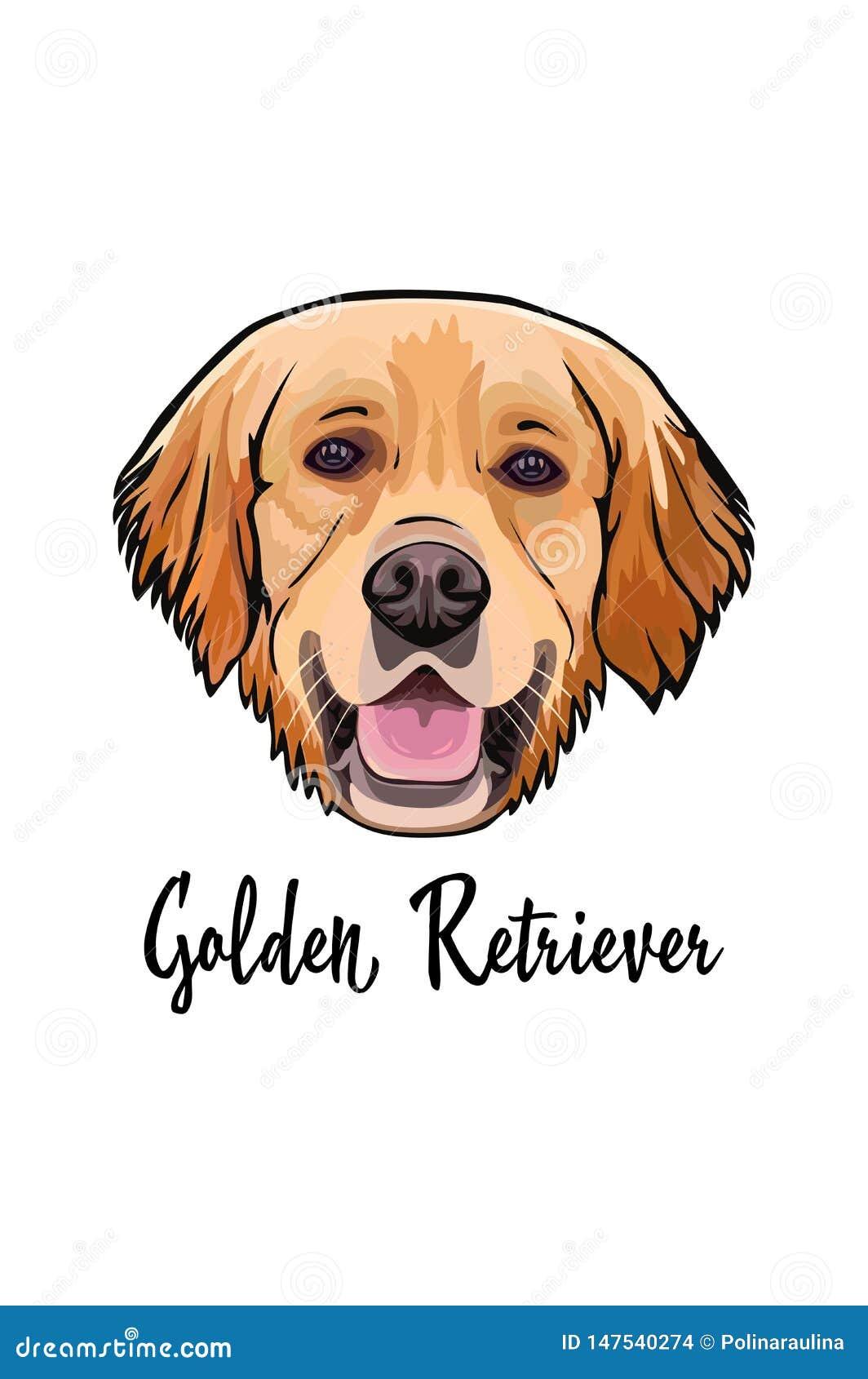 Retrato Del Vector De Un Golden Retriever De La Raza Del