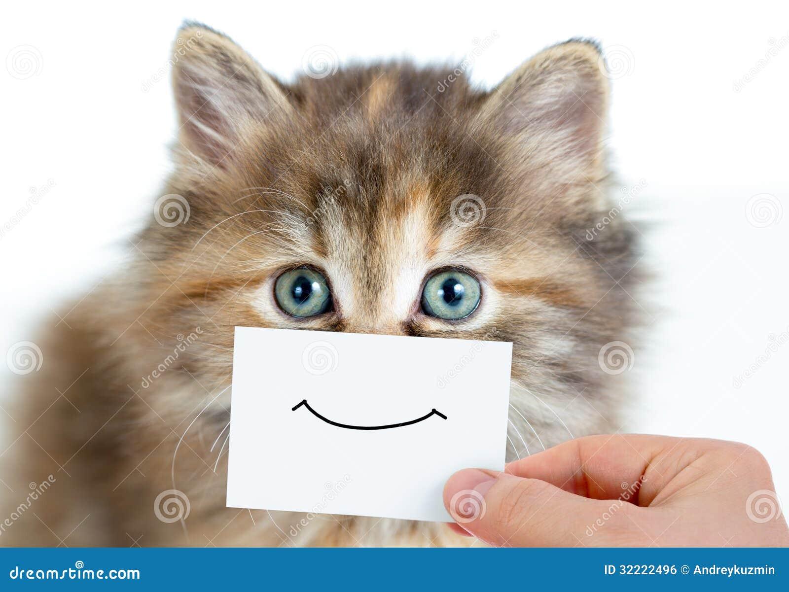 Retrato divertido del gatito con sonrisa en tarjeta