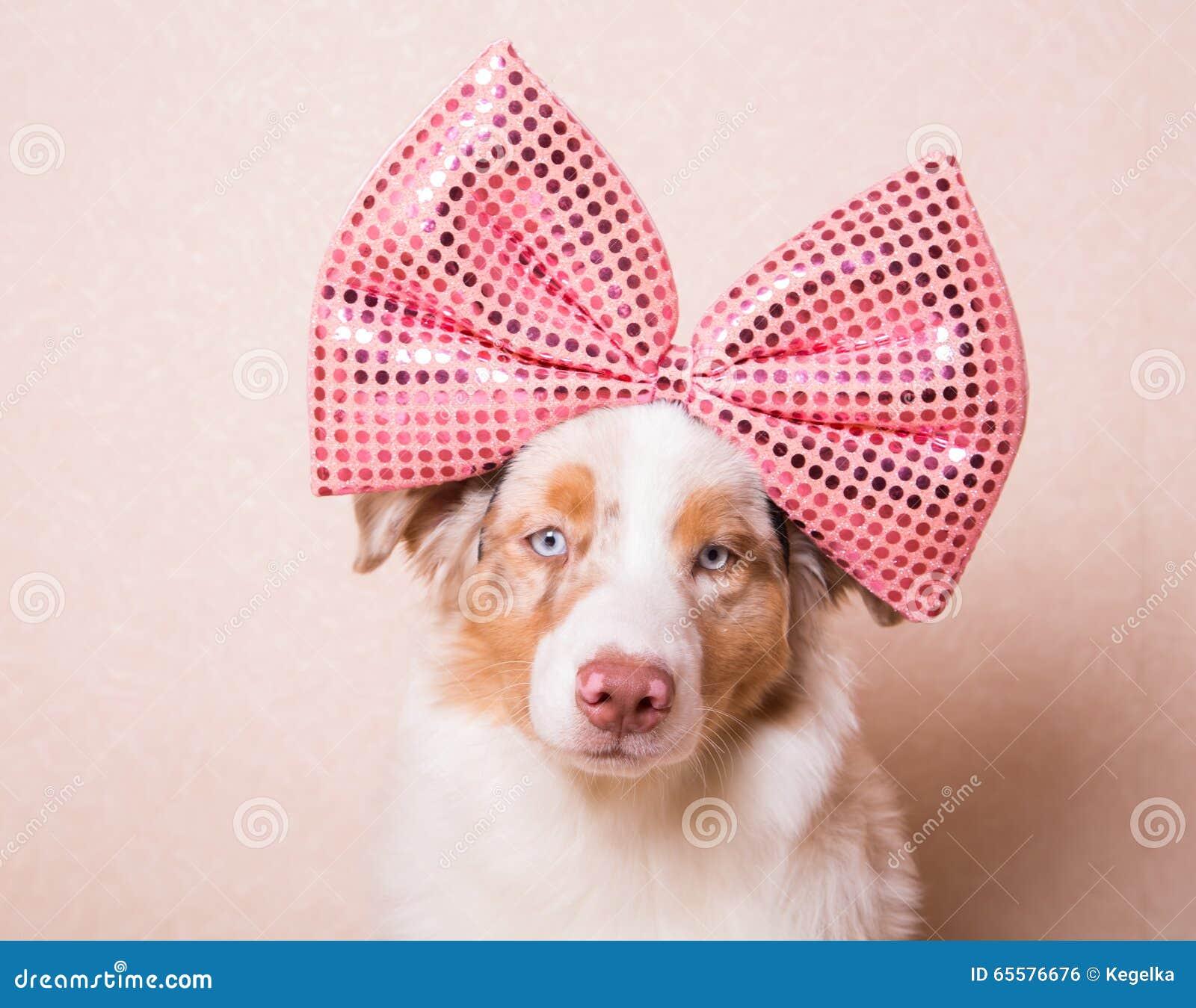 Retrato do cão com uma curva cor-de-rosa enorme em sua cabeça