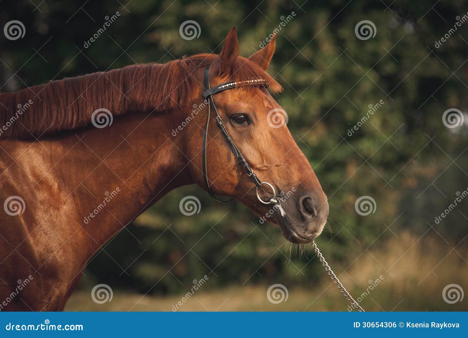 Retrato do cavalo no verão