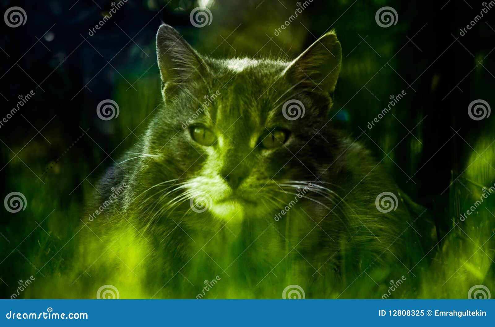 Retrato do gato