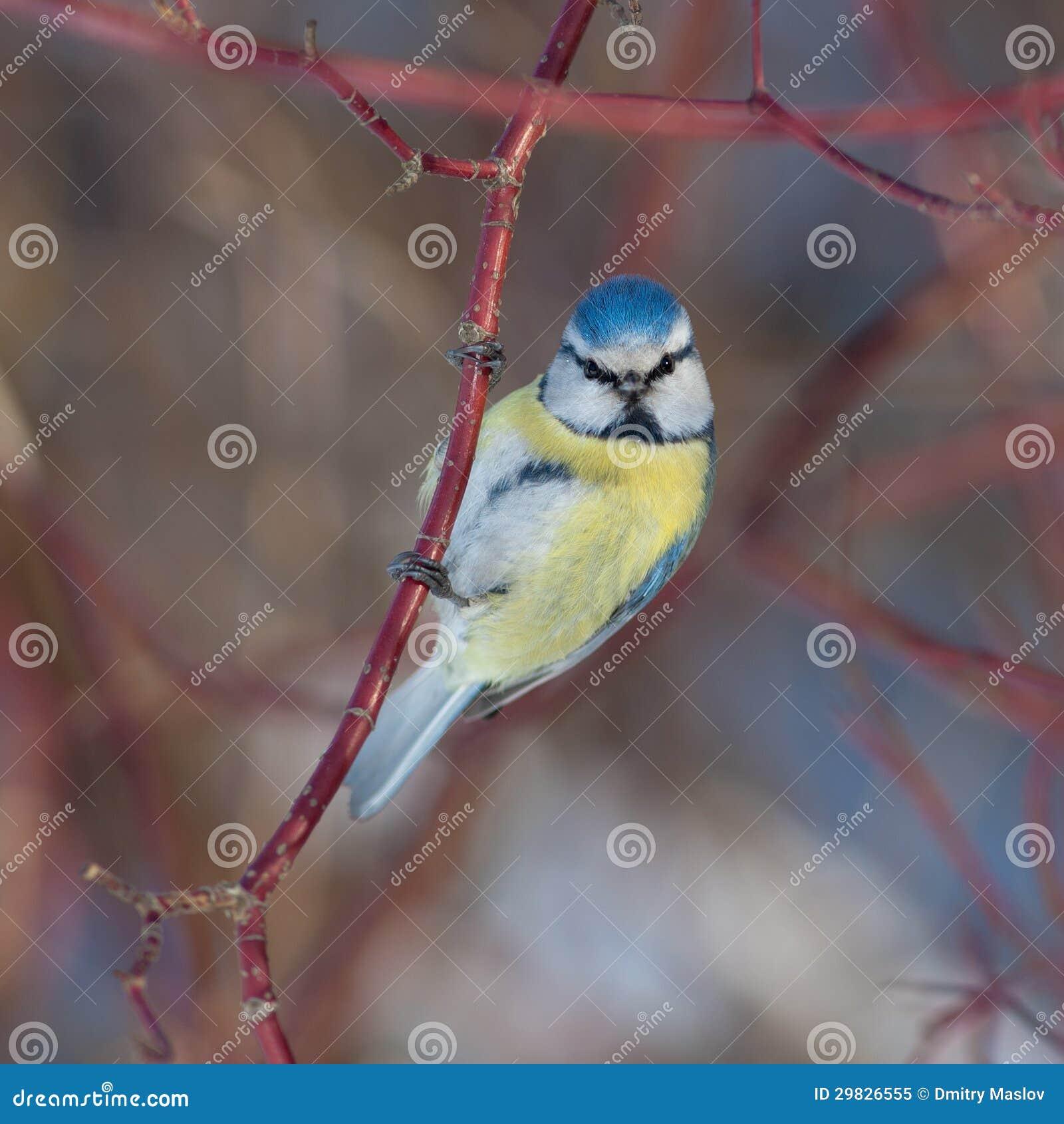 Relance do pássaro