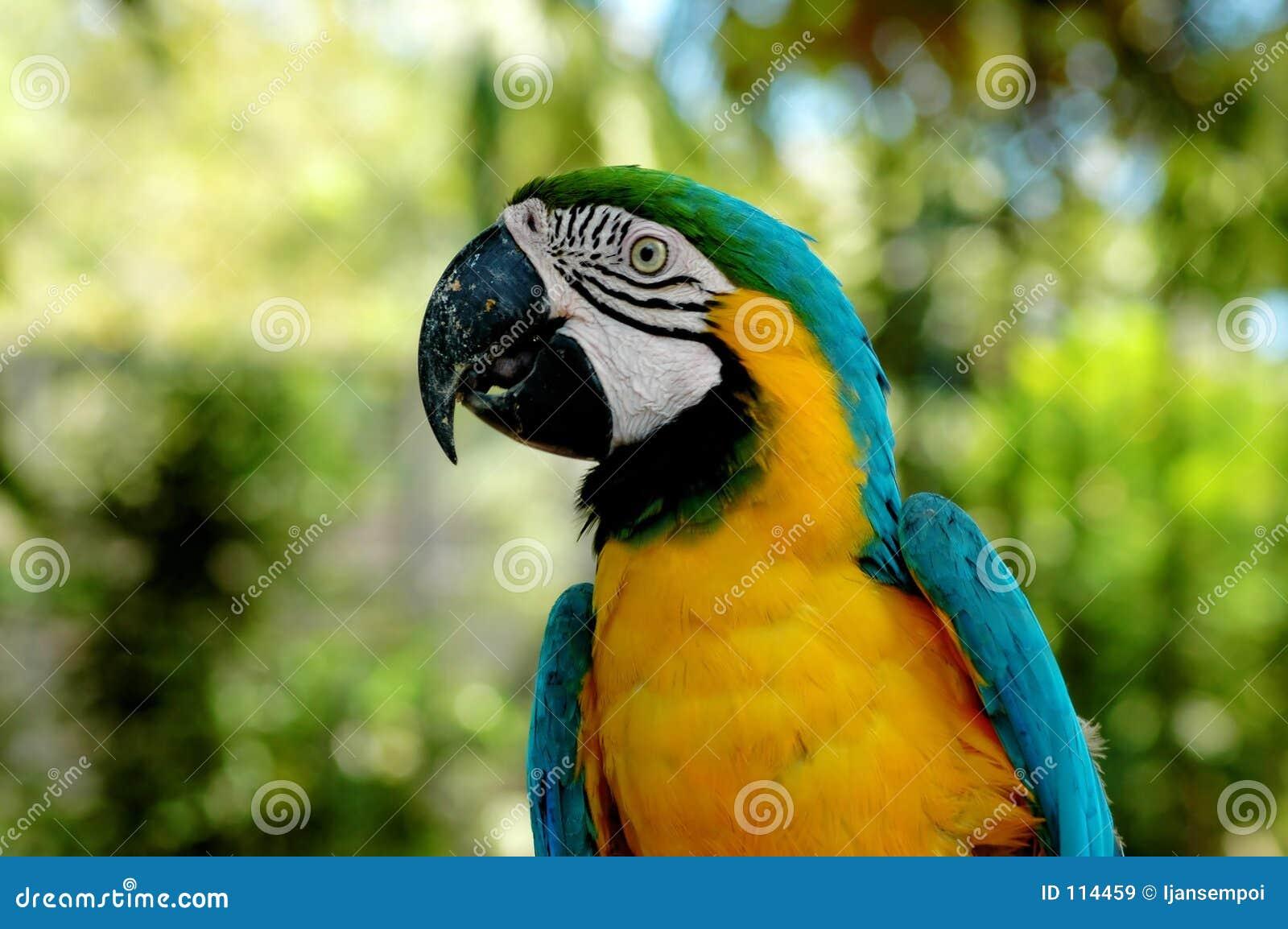 Retrato do pássaro