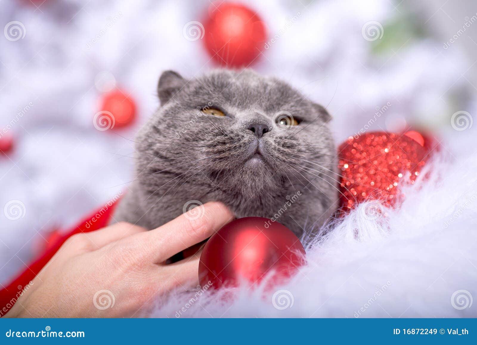 Retrato do Xmas de um gato