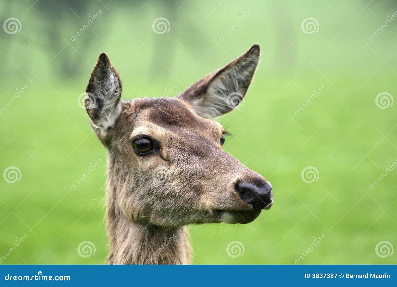 Retrato dos cervos