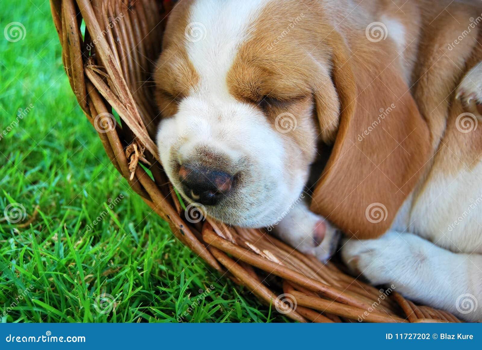 Retrato encantador do cão