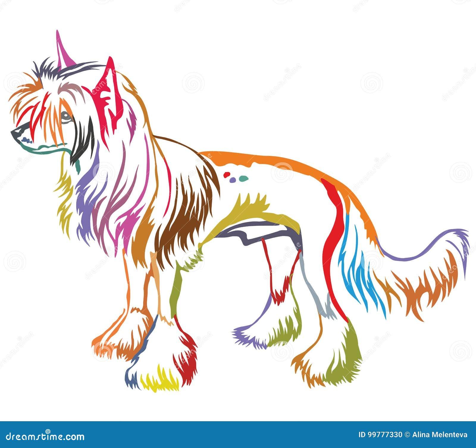 Retrato ereto decorativo colorido do cão com crista chinês